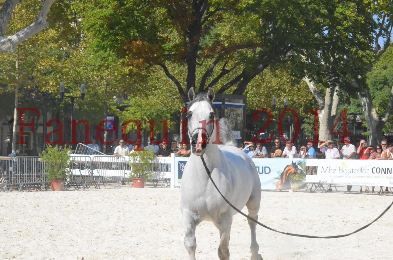 Concours National de Nîmes de chevaux ARABES 2014 - Championnat - SHAOLIN DE NEDJAIA - 21