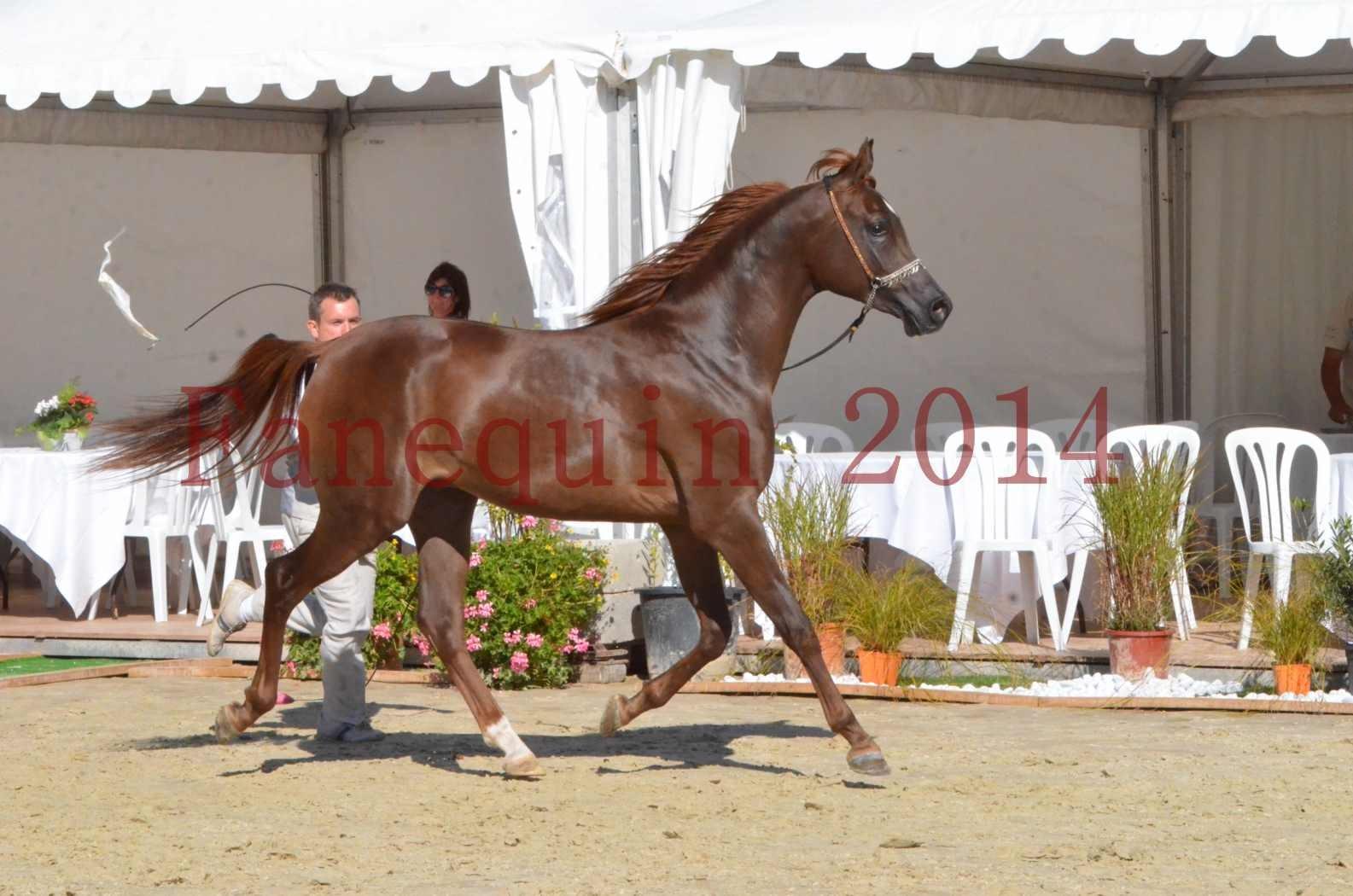Championnat de FRANCE 2014 - Amateurs - LAMAL - 53