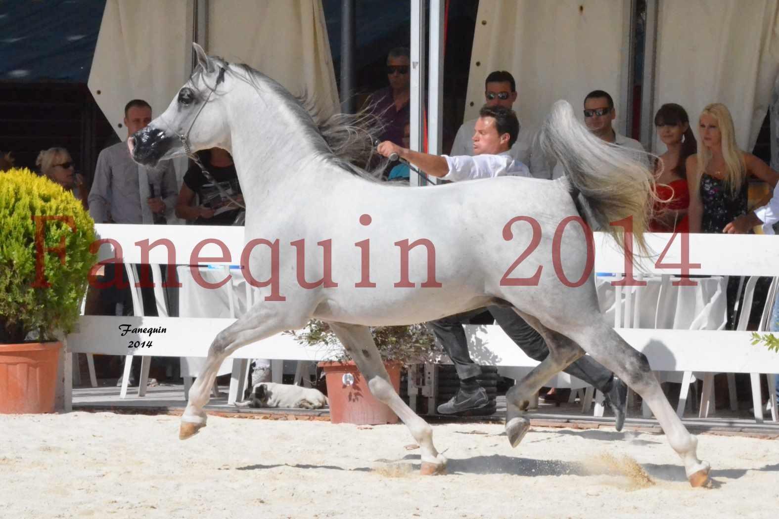 Concours National de Nîmes de chevaux ARABES 2014 - Notre Sélection - SHAOLIN DE NEDJAIA - 10