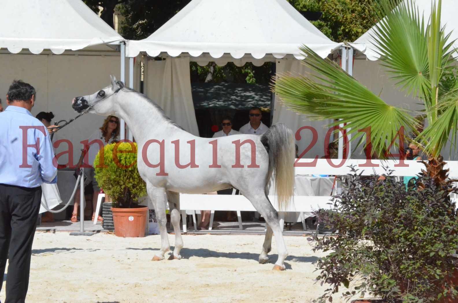 Concours National de Nîmes de chevaux ARABES 2014 - Sélection - SHAOLIN DE NEDJAIA - 72