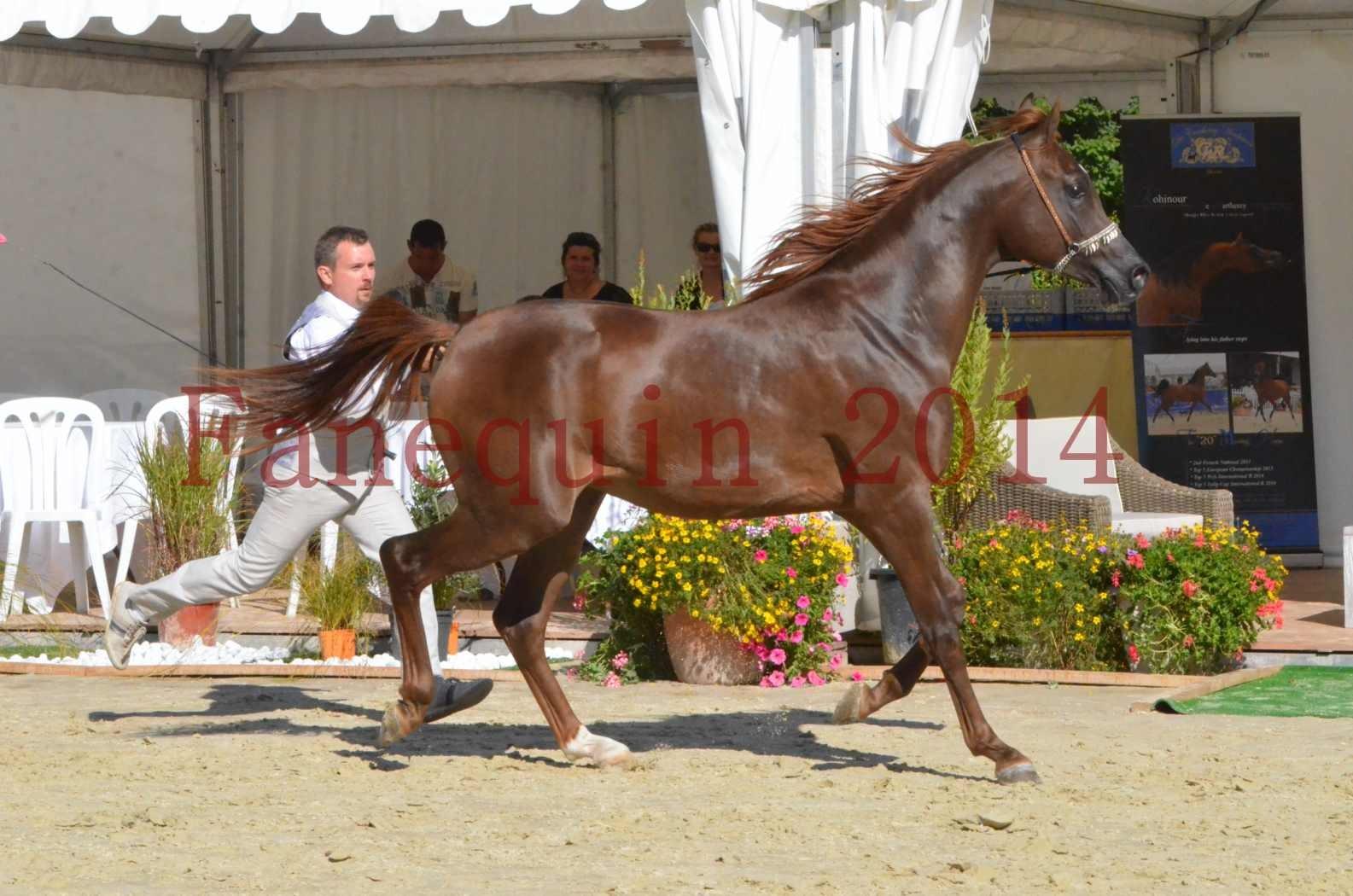Championnat de FRANCE 2014 - Amateurs - LAMAL - 57