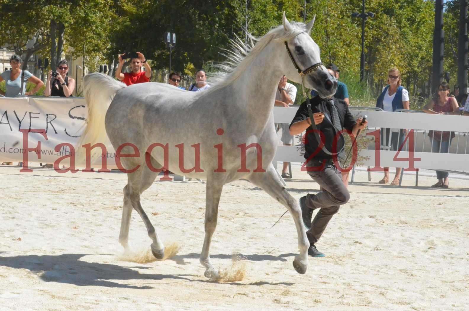 Concours national de Nîmes 2014 - Sélection  - VOLODIA DE LAFON - 19