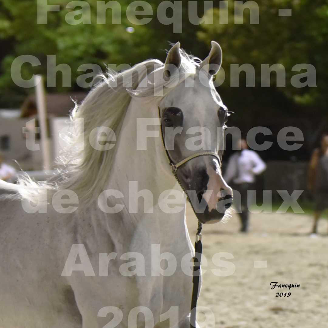 Championnat de France des chevaux Arabes en 2019 à VICHY - SHAMS EL ASHIRAF - Portraits - 2