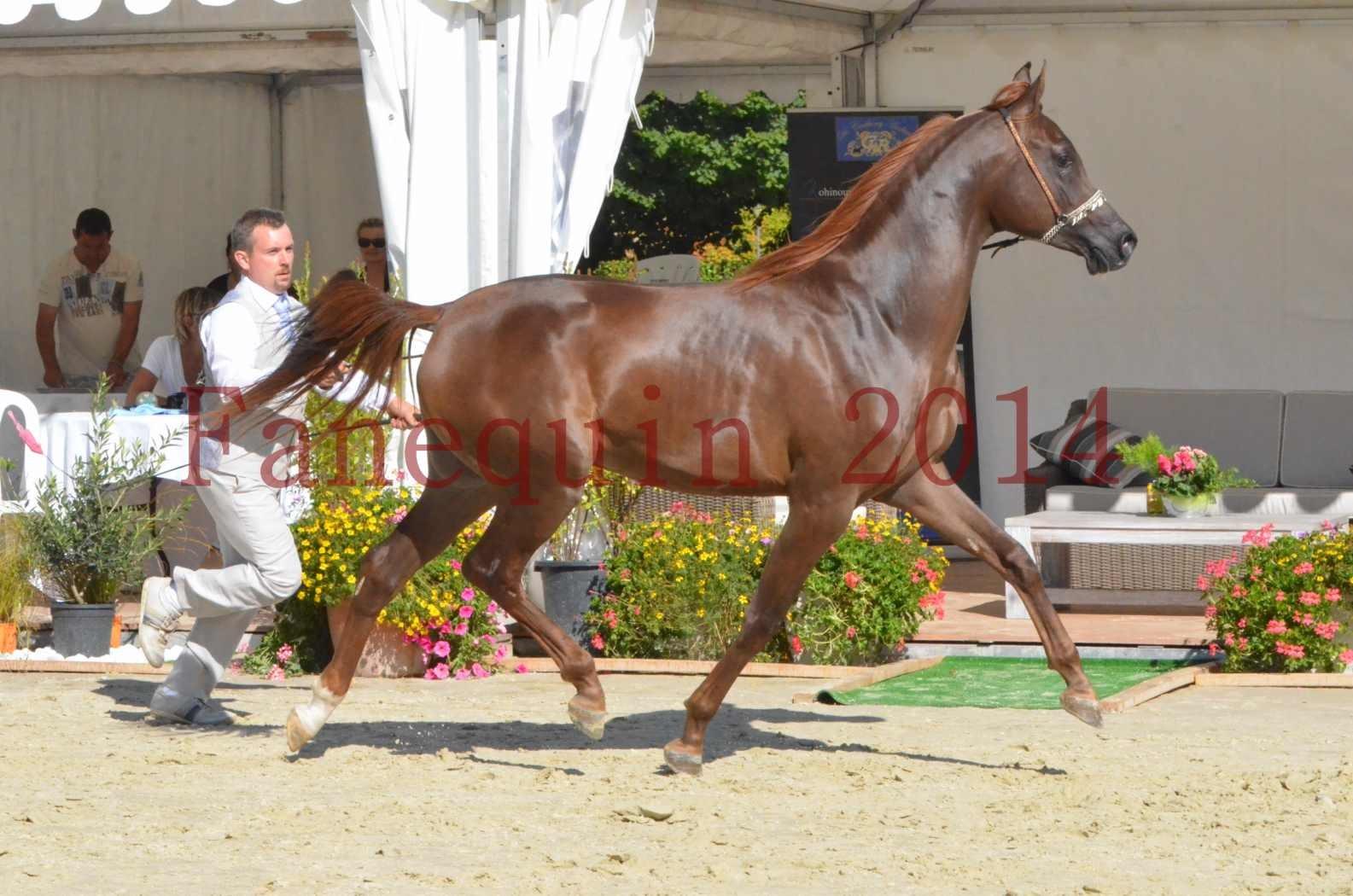 Championnat de FRANCE 2014 - Amateurs - LAMAL - 58