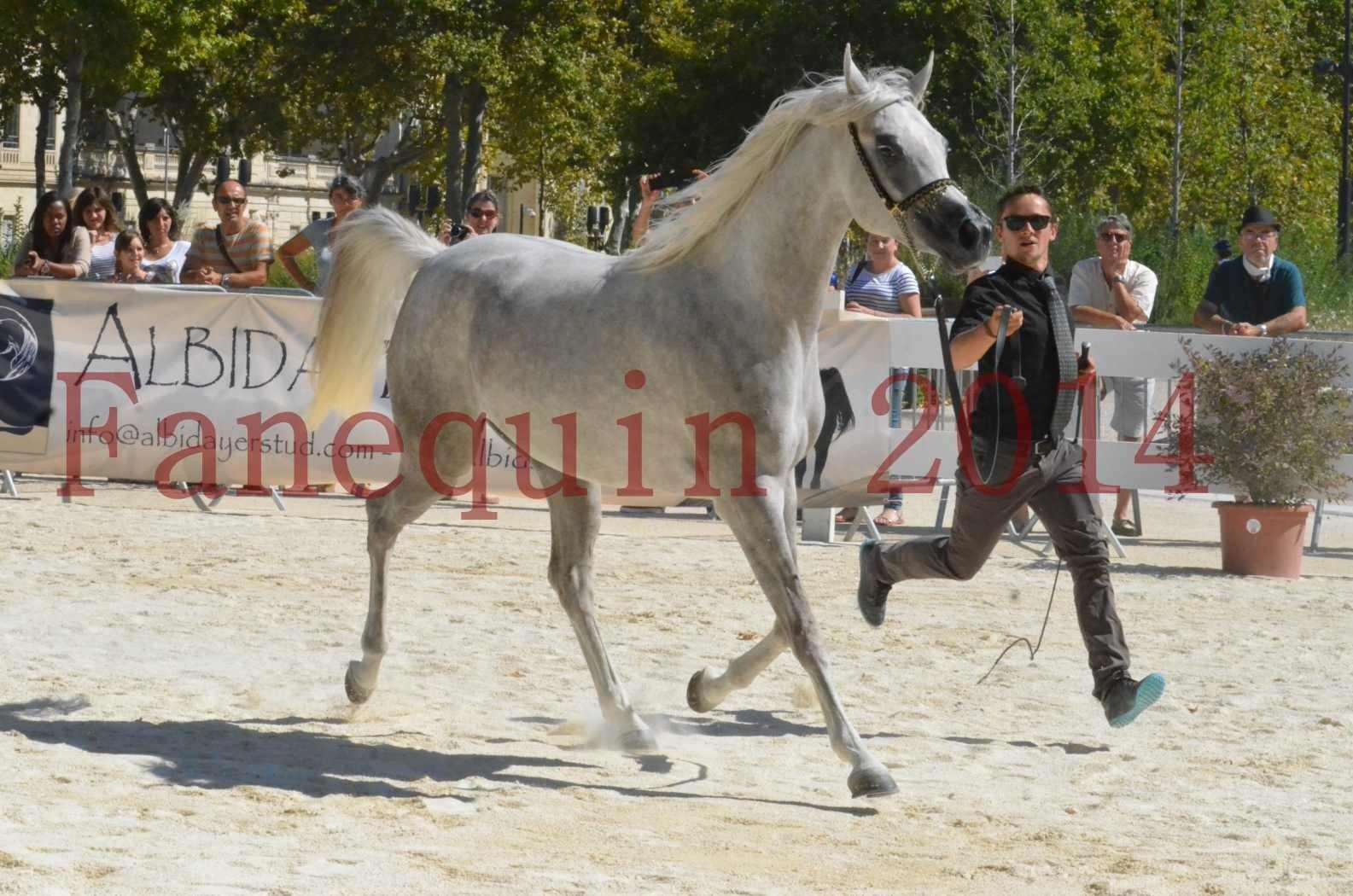 Concours national de Nîmes 2014 - Sélection  - VOLODIA DE LAFON - 18