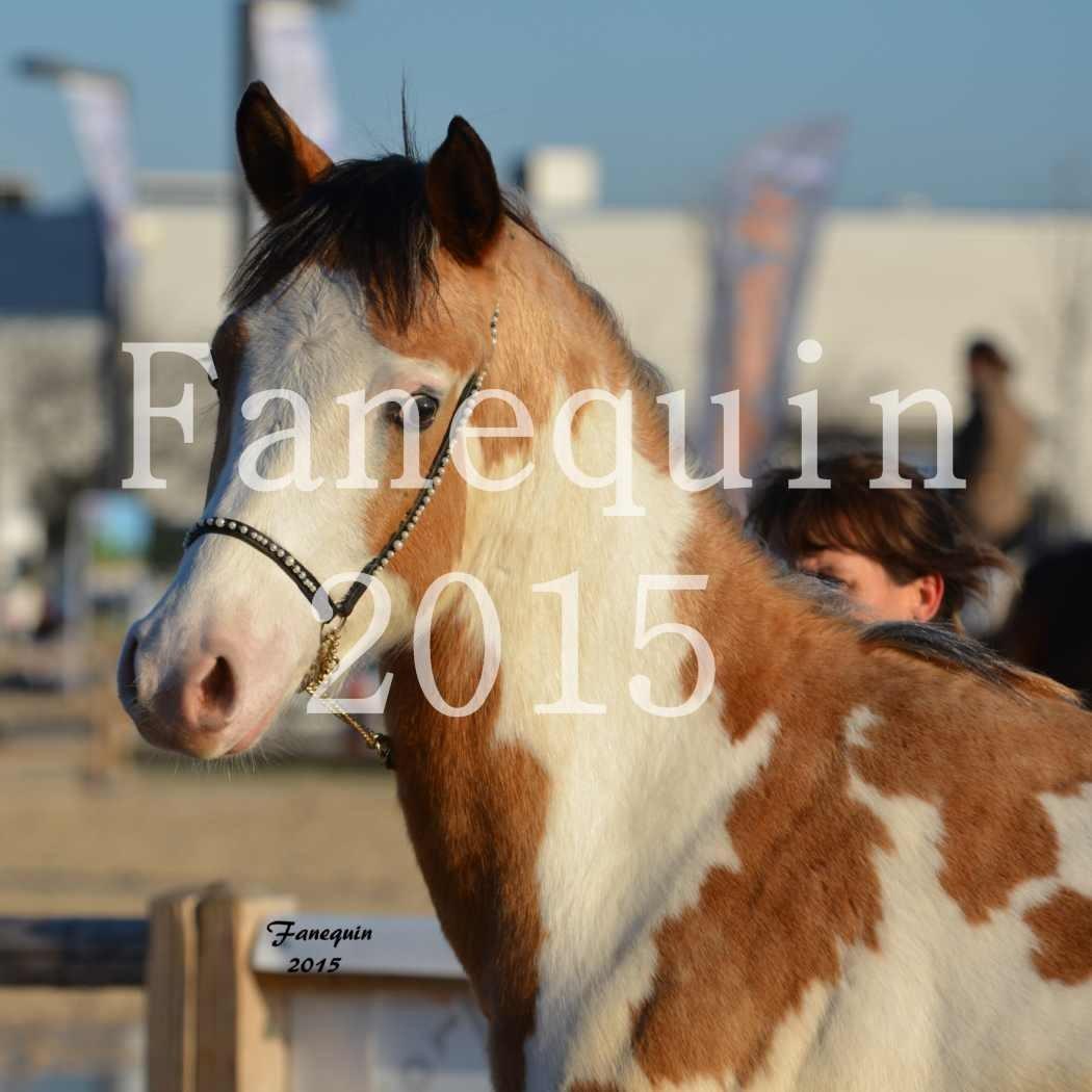 Cheval Passion 2015 - DSA (Demi Sang Arabe) - DARADHJA DU GRANDVAL - Portraits - 25