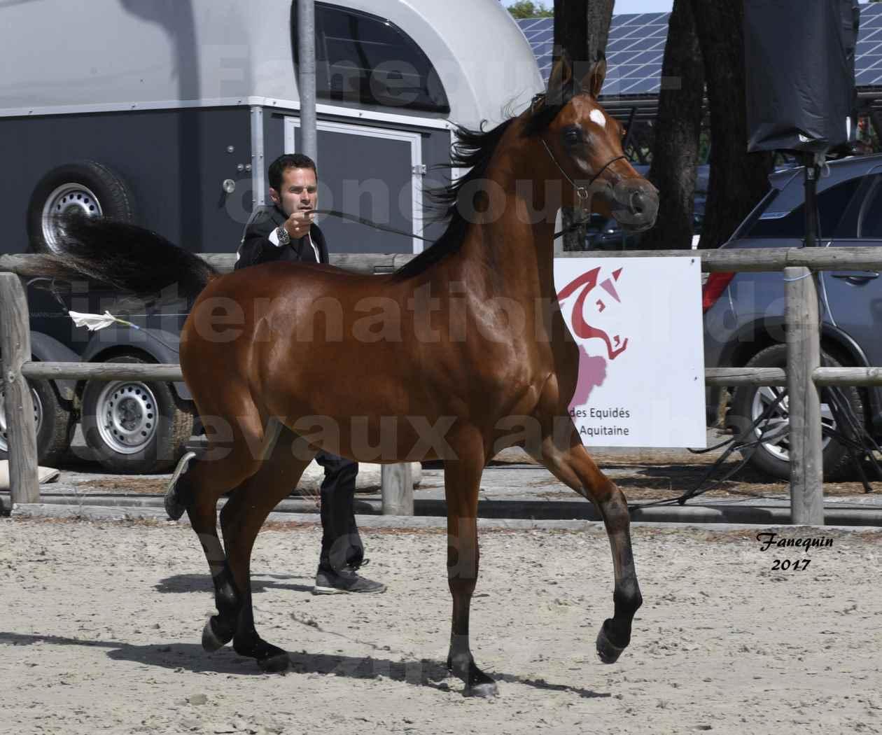 """Concours international de chevaux ARABES - """"Arabian Masters"""" Bordeaux 2017 - JABBOK DE NAUTIAC - 28"""