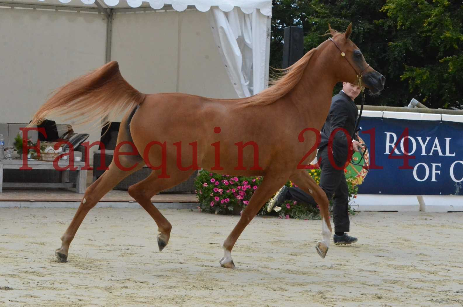 CHAMPIONNAT DE FRANCE 2014 A POMPADOUR - Sélection - LUTFINAH JA - 15