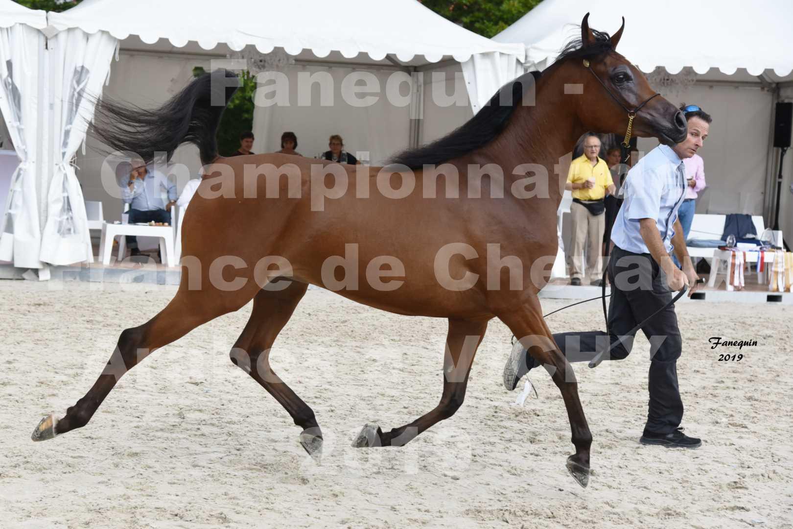 Championnat de France des chevaux Arabes en 2019 à VICHY - MADONNA J - 5