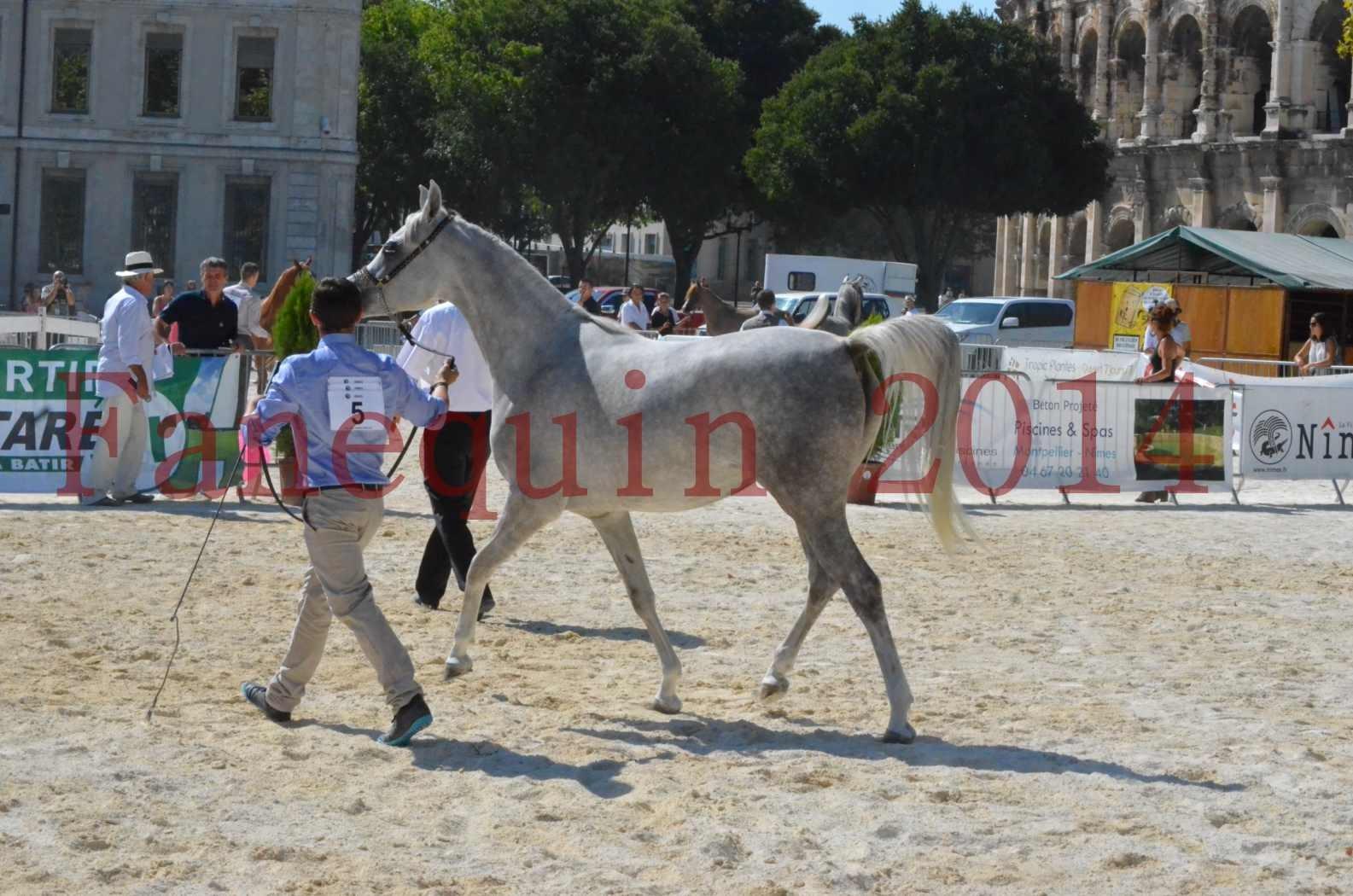 Concours national de Nîmes 2014 - Championnat Femelles Juniors - VOLODIA DE LAFON - 14