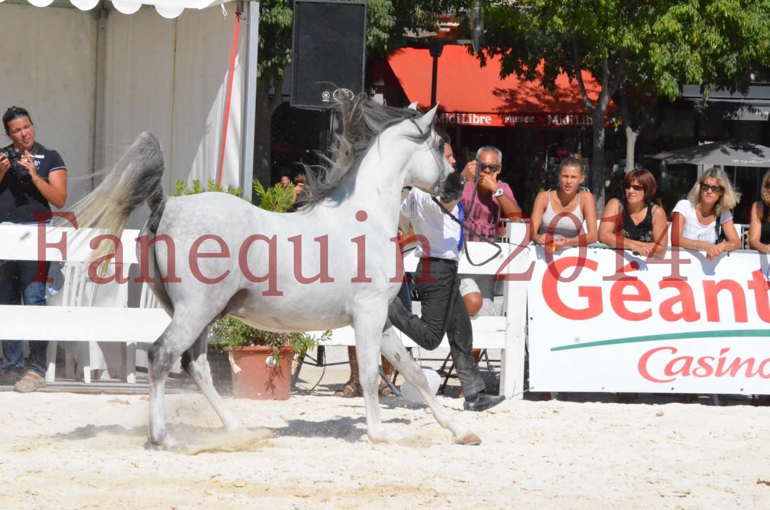 Concours National de Nîmes de chevaux ARABES 2014 - Sélection - SHAOLIN DE NEDJAIA - 25