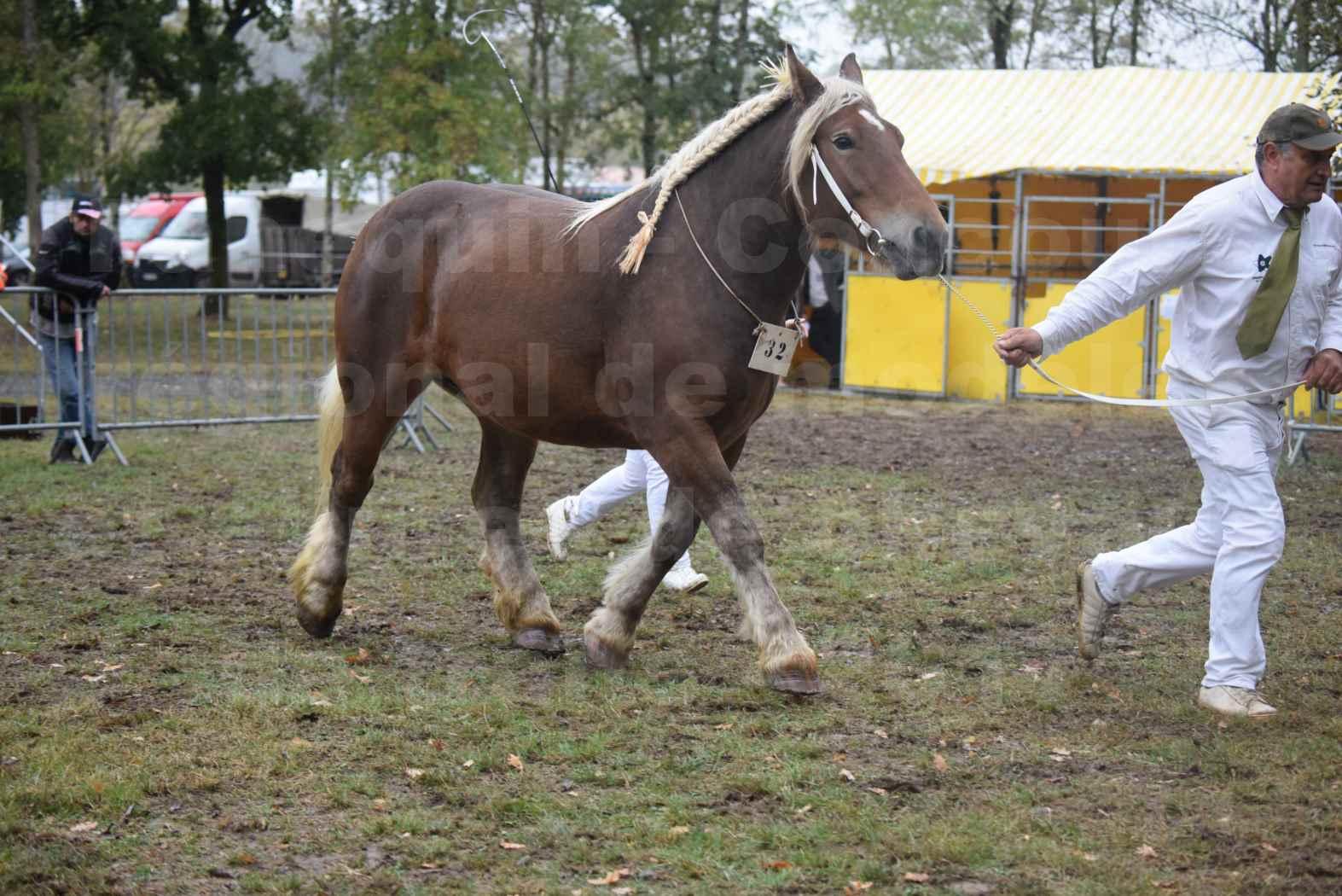 Concours Régional de chevaux de traits en 2017 - Pouliche Trait COMTOIS - ECLIPCE DE PIGASSOU - 17