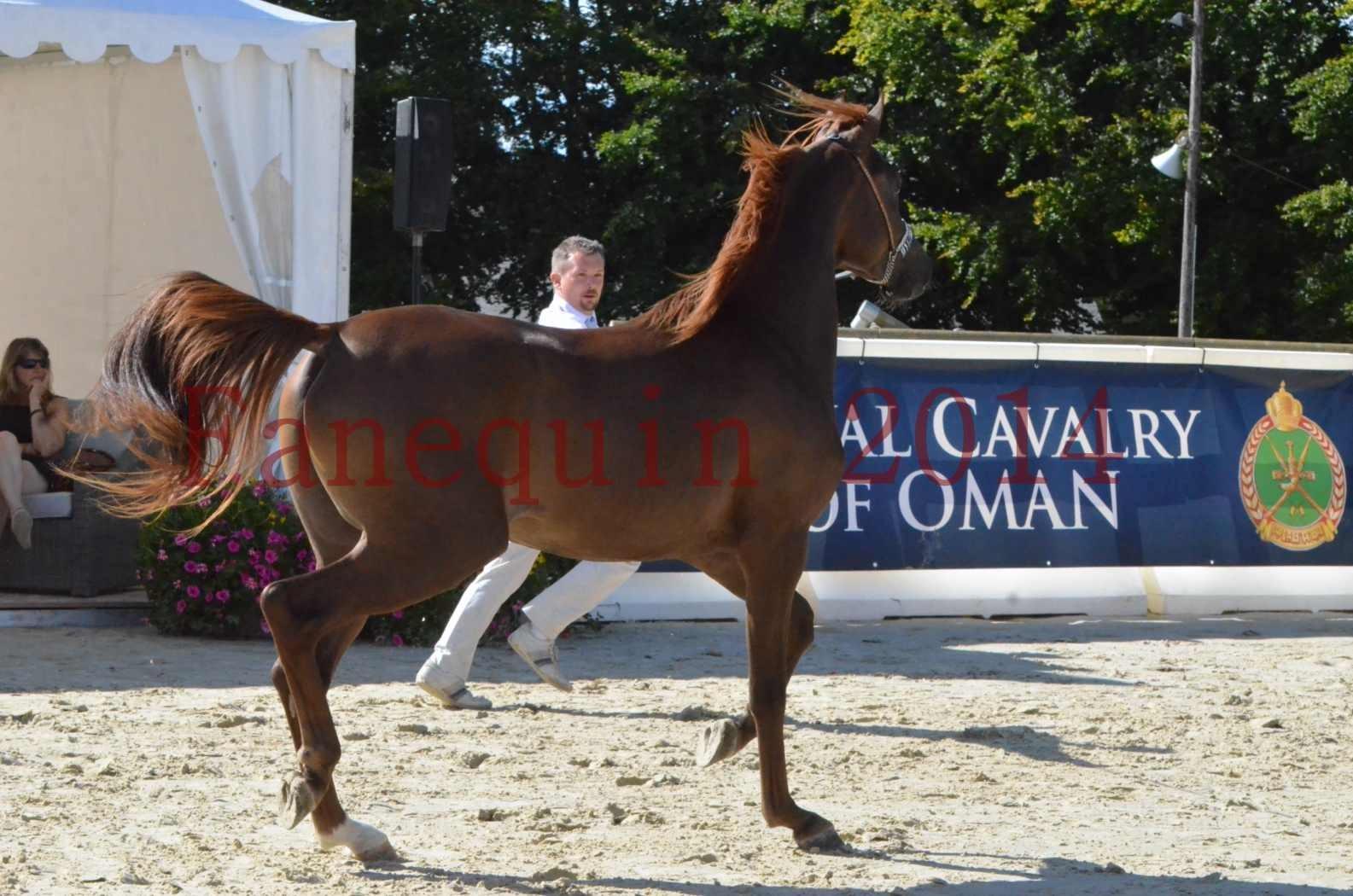 Championnat de FRANCE 2014 - Amateurs - LAMAL - 43