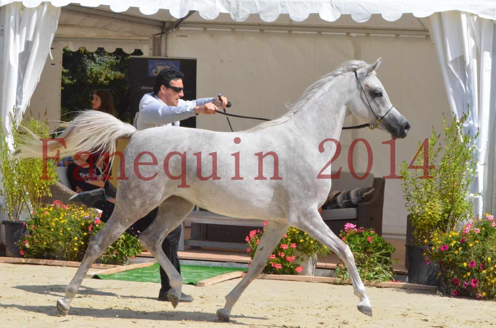 Championnat de FRANCE 2014 - Amateurs - VOLODIA DE LAFON - 049
