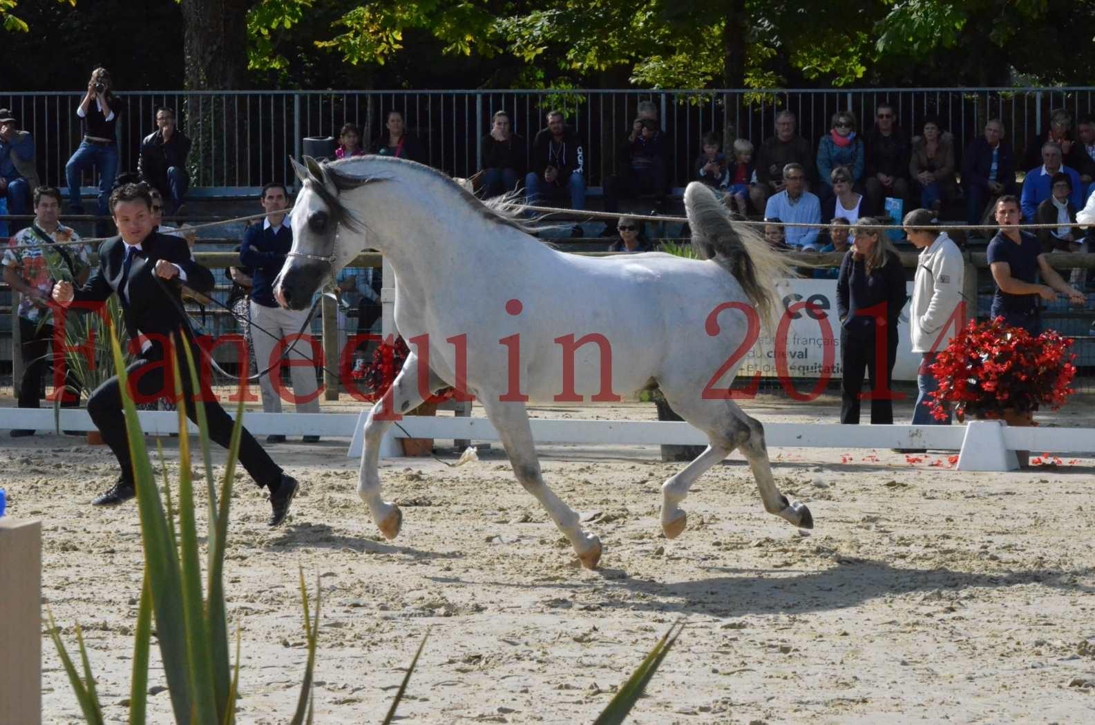 CHAMPIONNAT DE FRANCE  2014 A POMPADOUR - Sélection - SHAOLIN DE NEDJAIA - 37