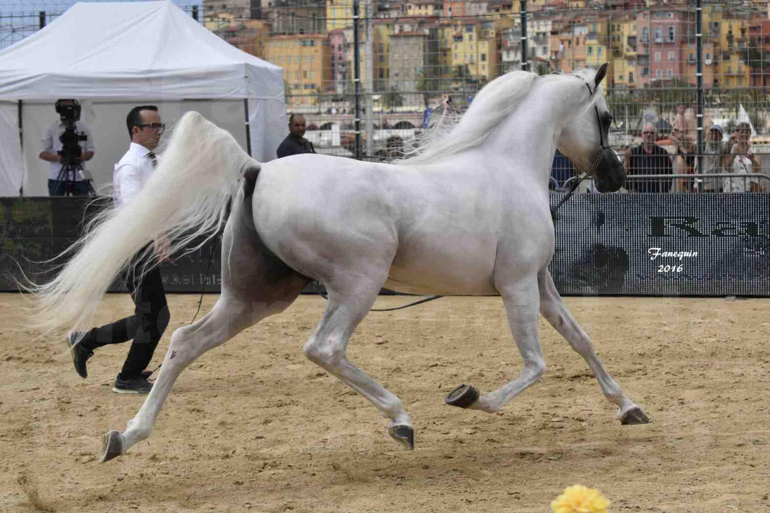 Show International de chevaux ARABES de MENTON 2016 - AJA ANGELO - 21
