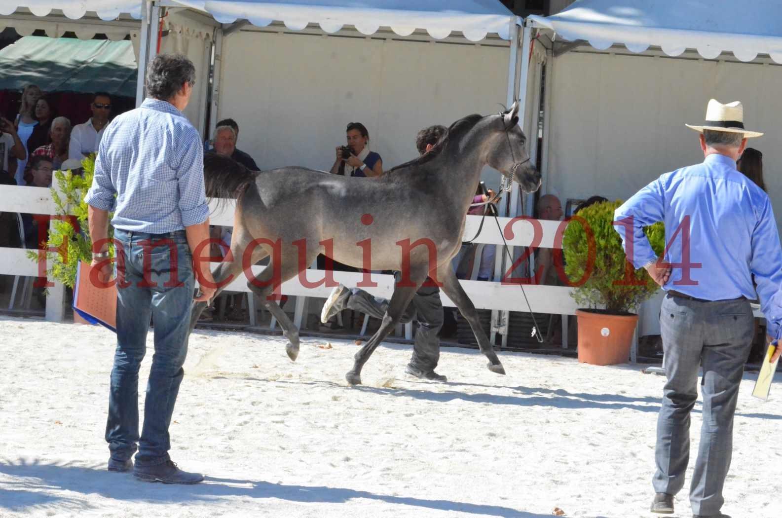 Concours National de Nîmes de chevaux ARABES 2014 - Championnat - JOSEPH'S BOUZIOLS - S 04