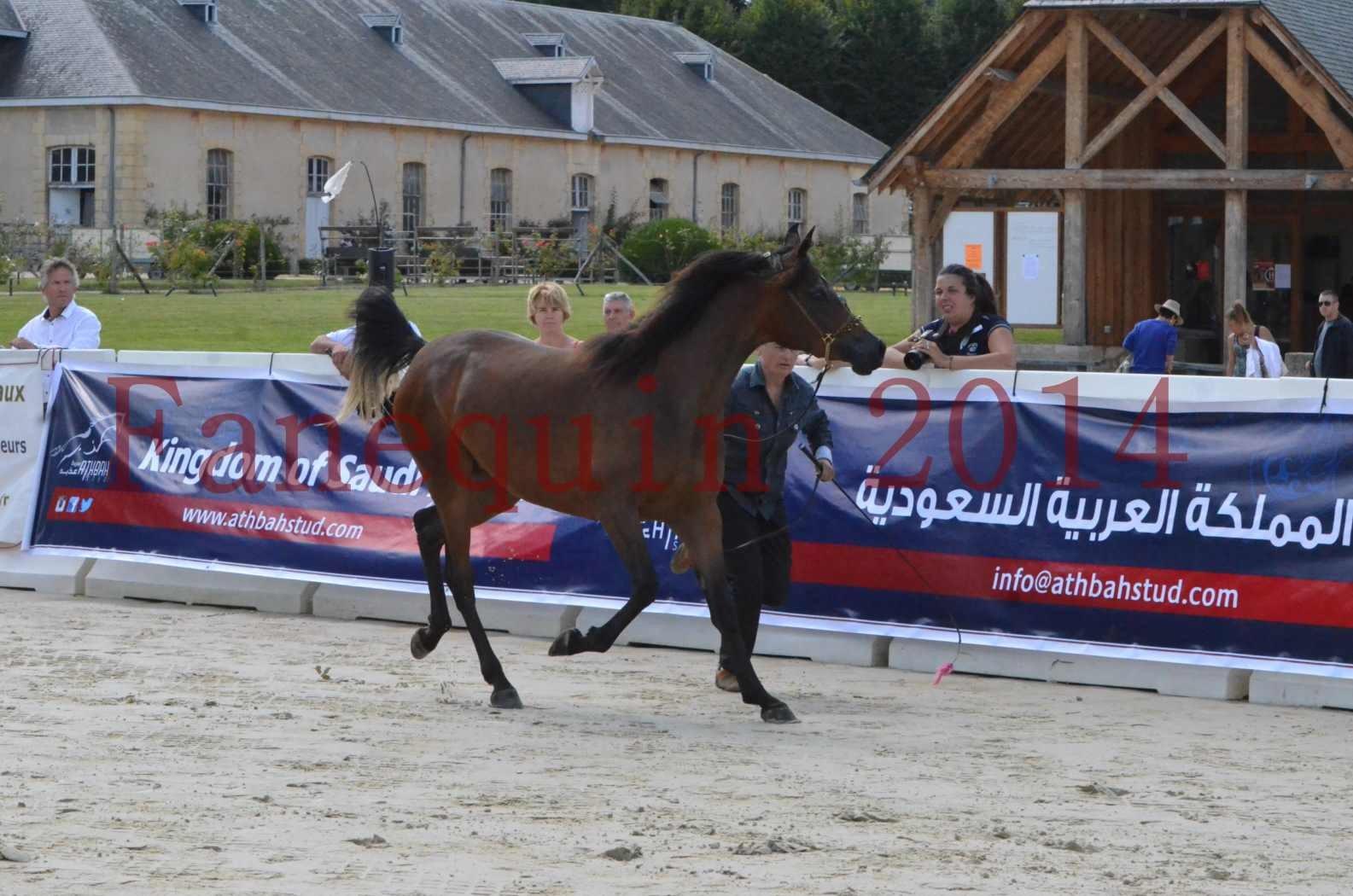 Championnat de FRANCE 2014 - Amateurs - KAL'ELLE D'ELHORIA - 04