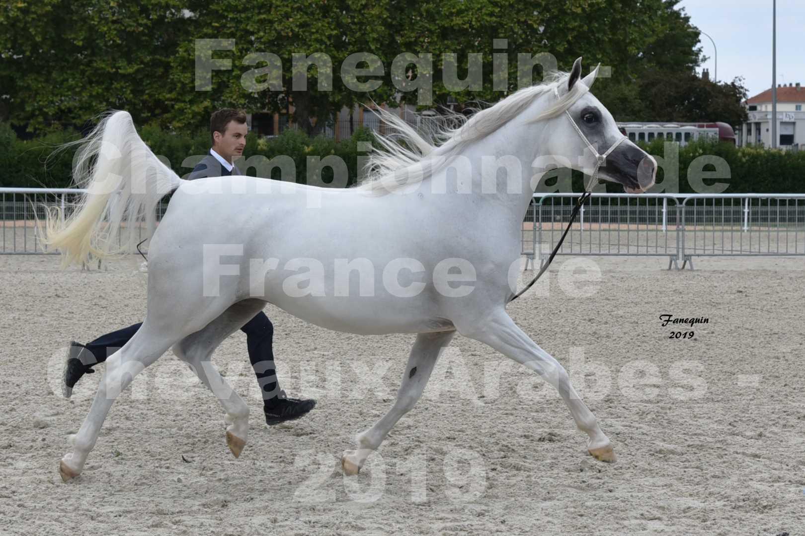 Championnat de France des chevaux Arabes en 2019 à VICHY - PIWNICIA NUNKI - 3
