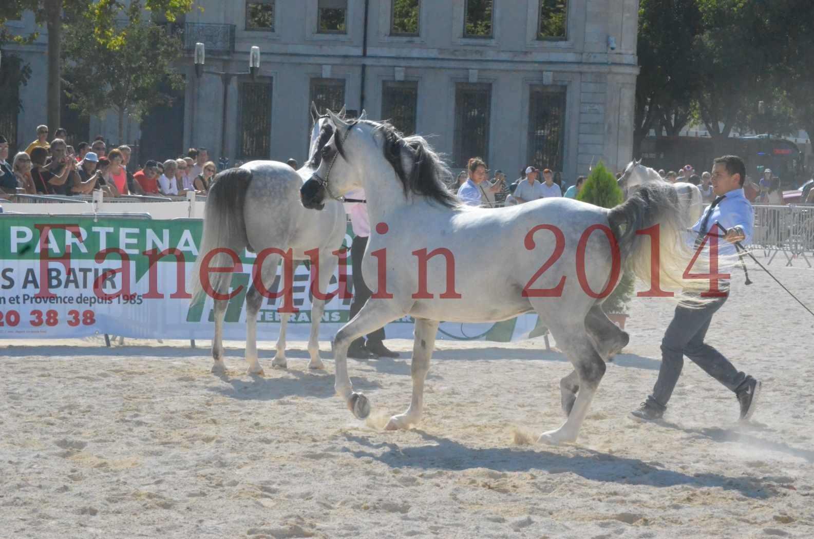 Concours National de Nîmes de chevaux ARABES 2014 - Championnat - SHAOLIN DE NEDJAIA - 04