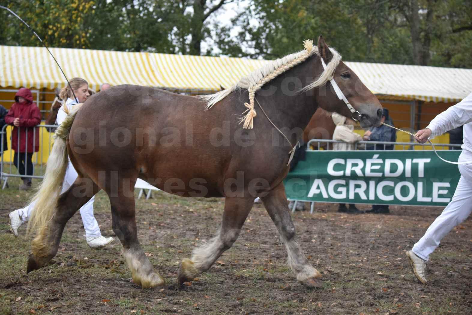 Concours Régional de chevaux de traits en 2017 - Pouliche Trait COMTOIS - ECLIPCE DE PIGASSOU - 20