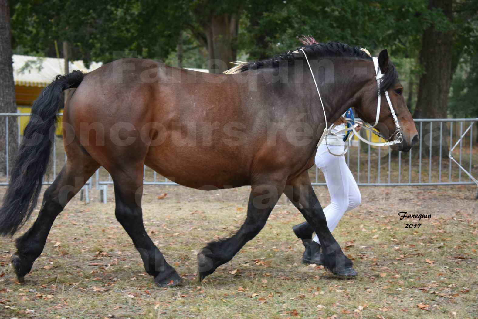 Concours Régional de chevaux de traits en 2017 - Jument & Poulain Trait COMTOIS - CANDY DE GRILLOLES - 03