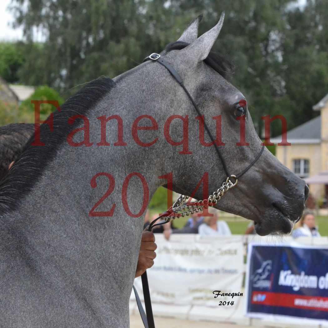 CHAMPIONNAT DE FRANCE 2014 A POMPADOUR - Notre Sélection - Portraits - AL MINYA - 7
