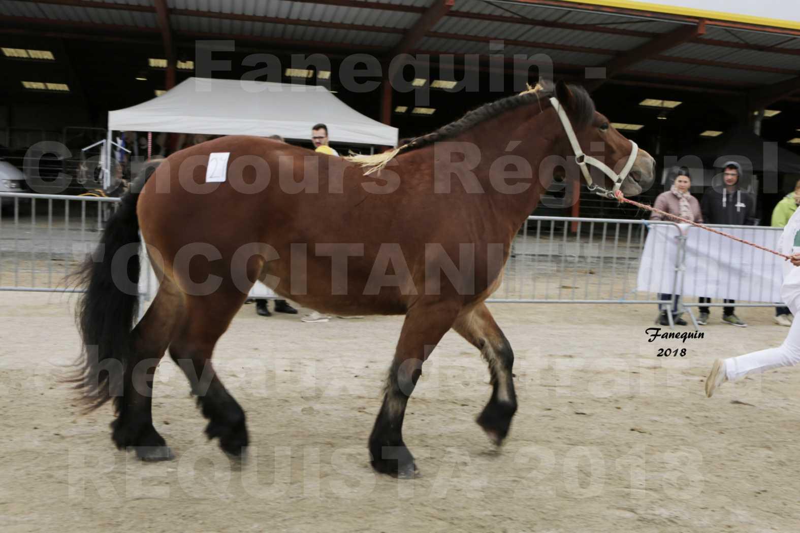 """Concours Régional """"OCCITANIE"""" de Chevaux de Traits à REQUISTA en 2018 - GALIPETTE 11 - 5"""