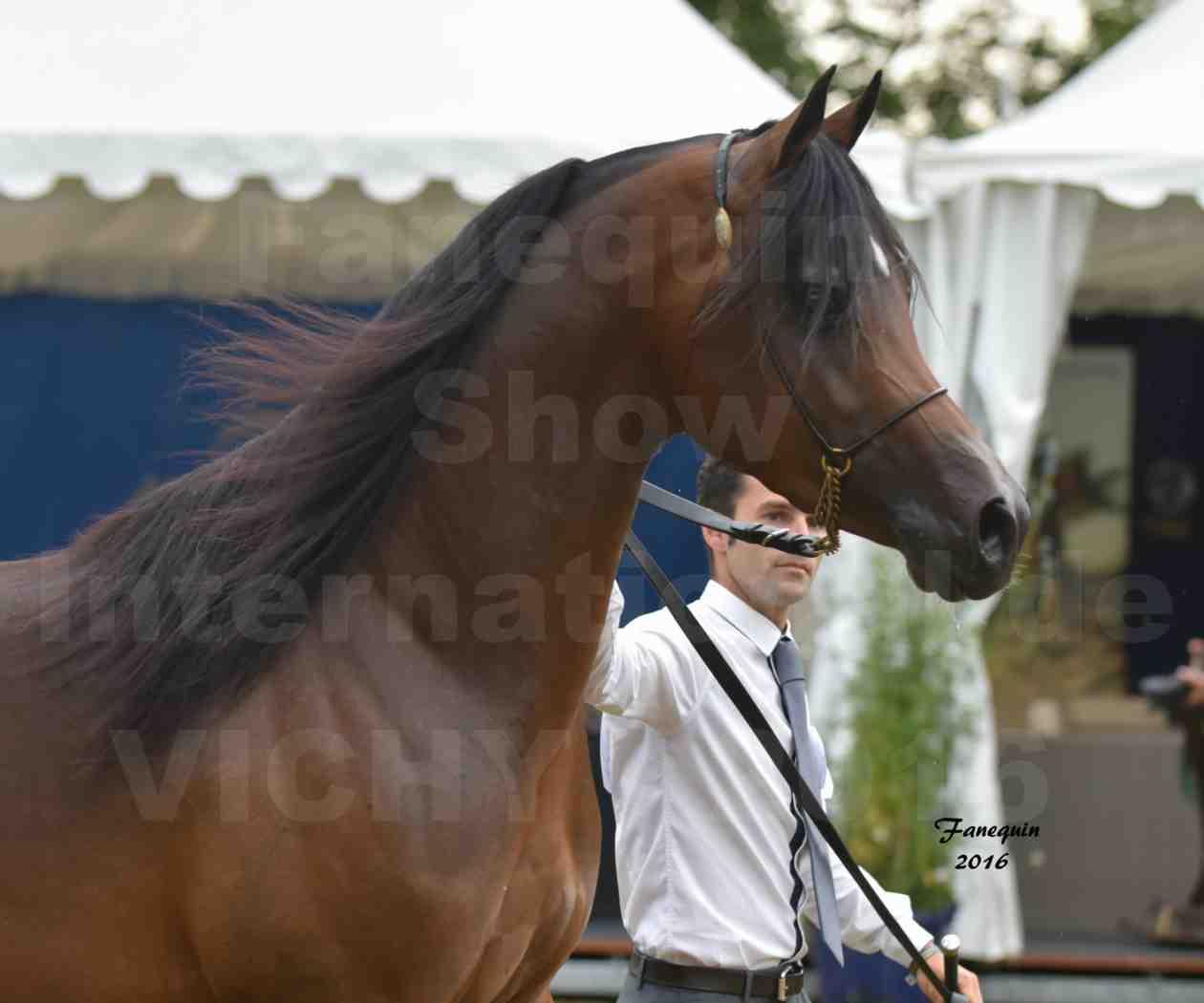 International Arabian Horse Show B de VICHY 2016 - MILLIAR - Notre Sélection - Portraits - 6