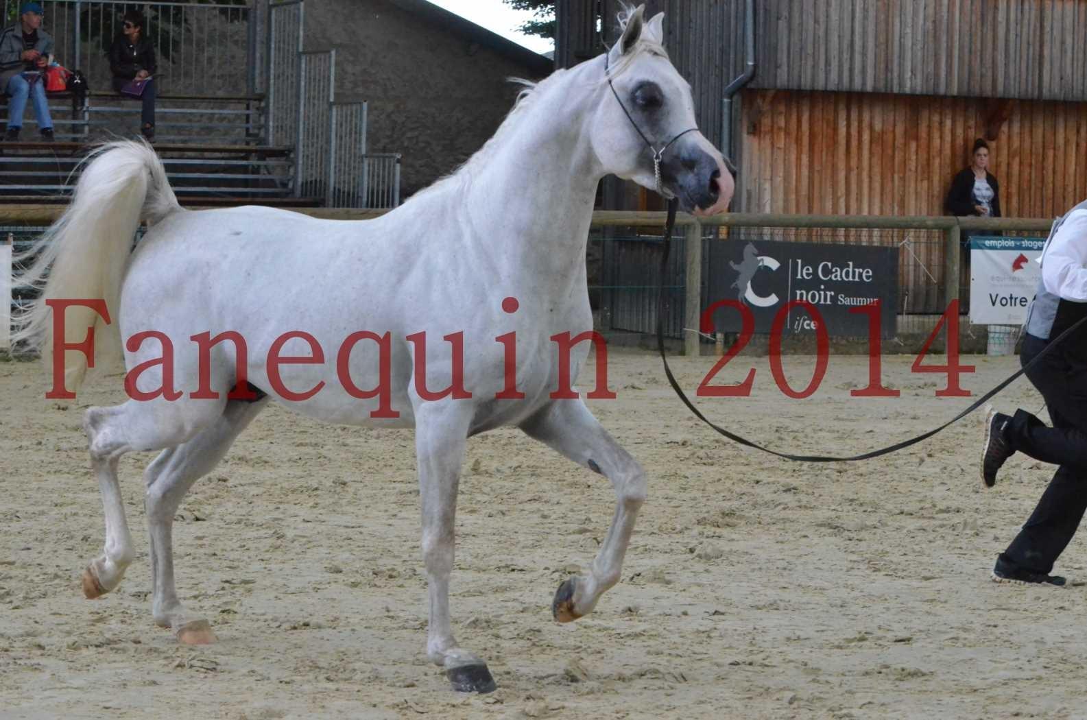 CHAMPIONNAT DE FRANCE 2014 A POMPADOUR - Sélection - FA STARLIGHT - 14