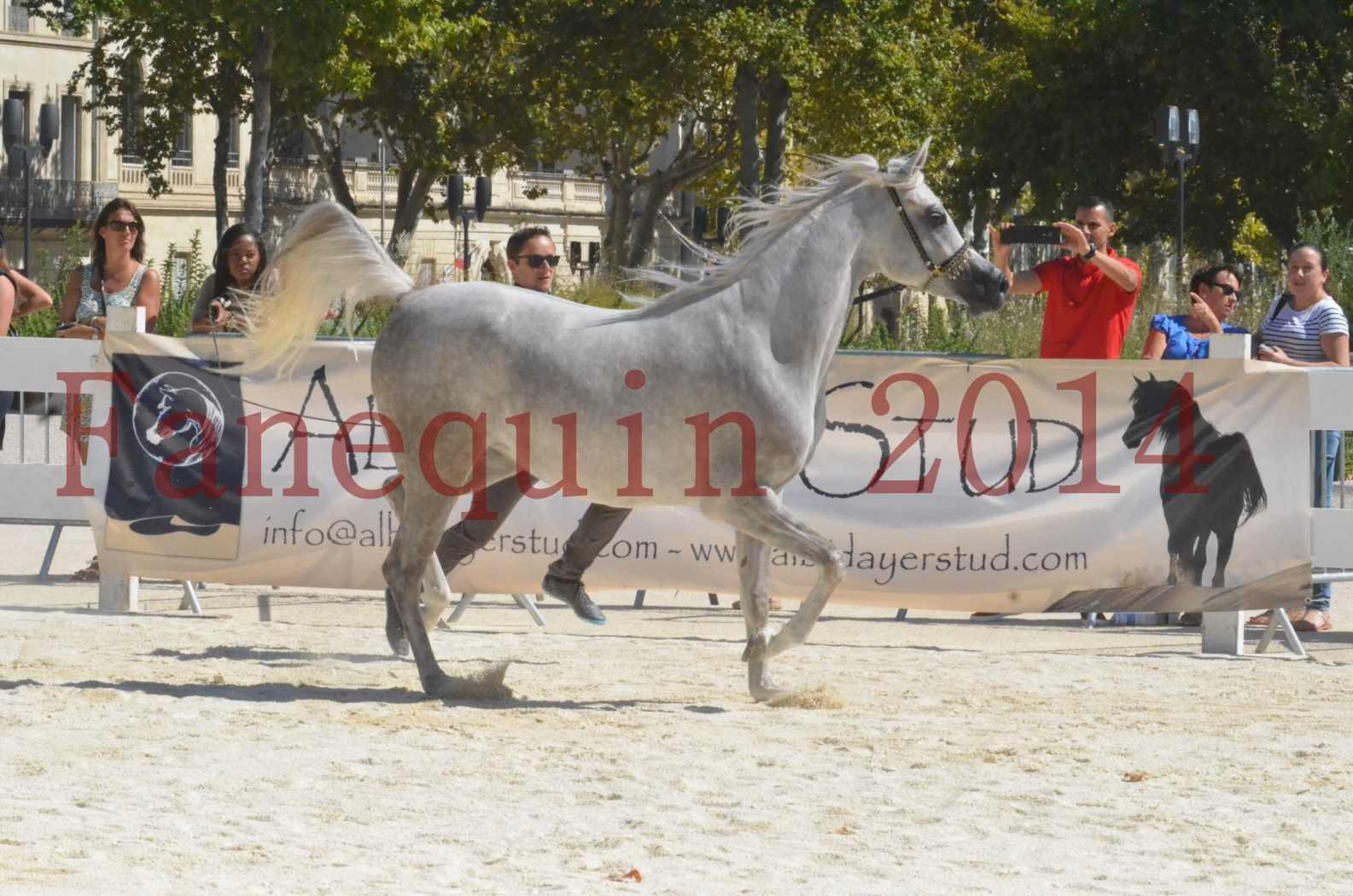 Concours national de Nîmes 2014 - Sélection  - VOLODIA DE LAFON - 12