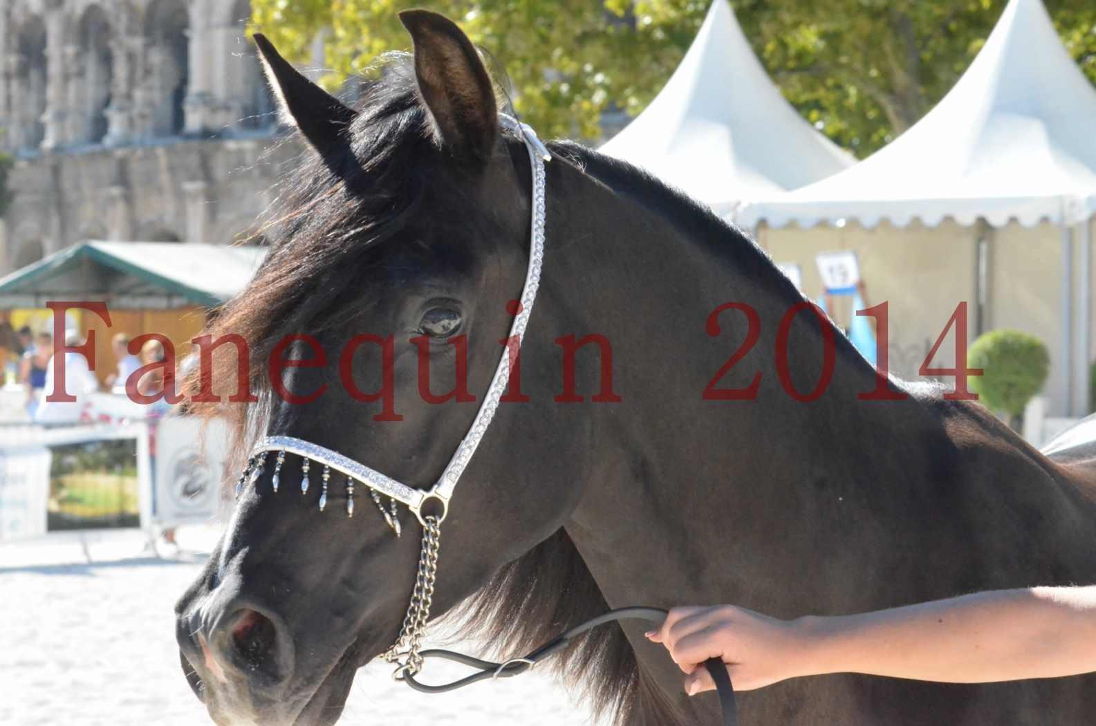 Concours National de Nîmes de chevaux ARABES 2014 - Sélection - Portraits - BALTYK DE CHAUMONT - 11