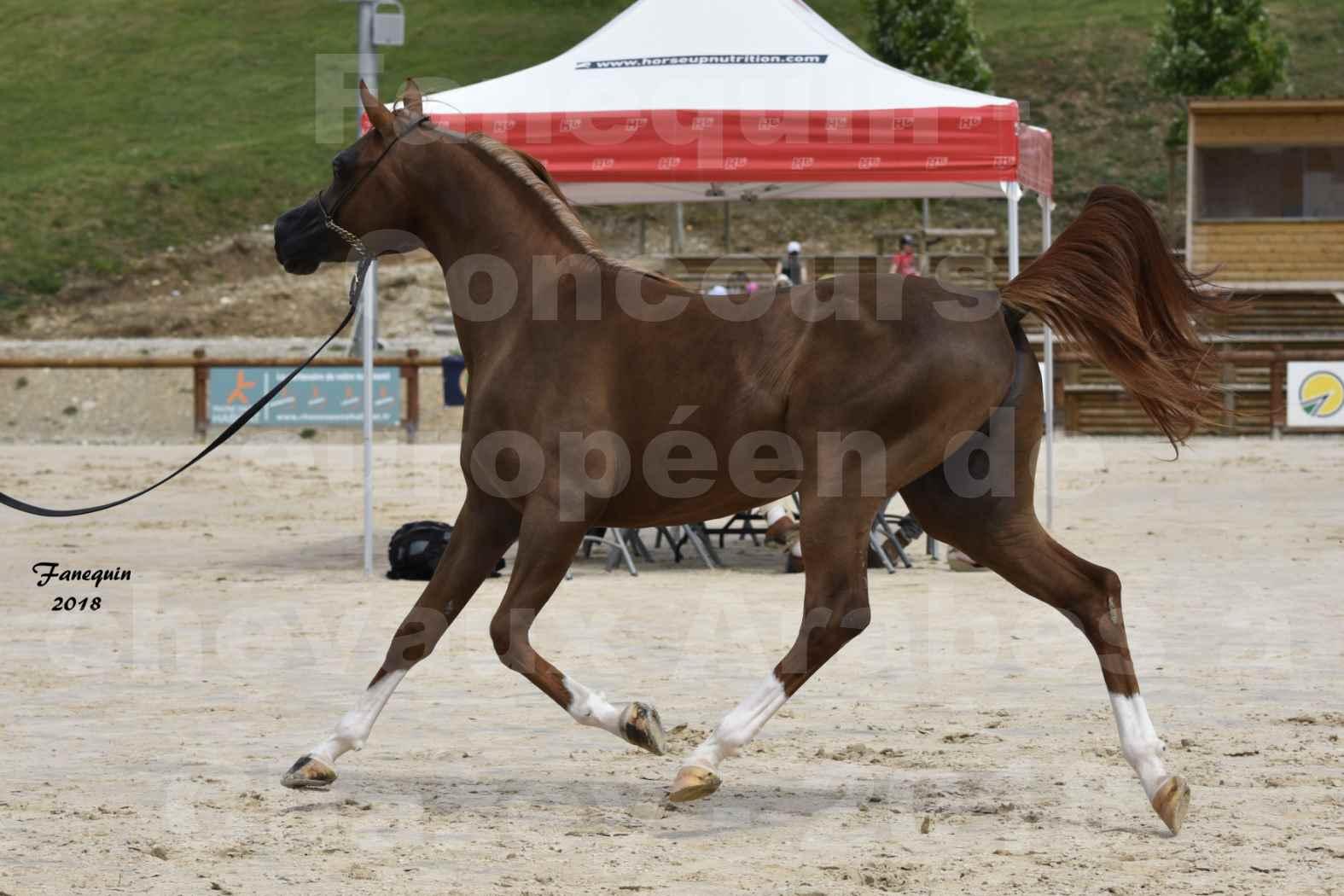 Concours Européen de chevaux Arabes à Chazey sur Ain 2018 - FANTASTIK - Notre Sélection - 7