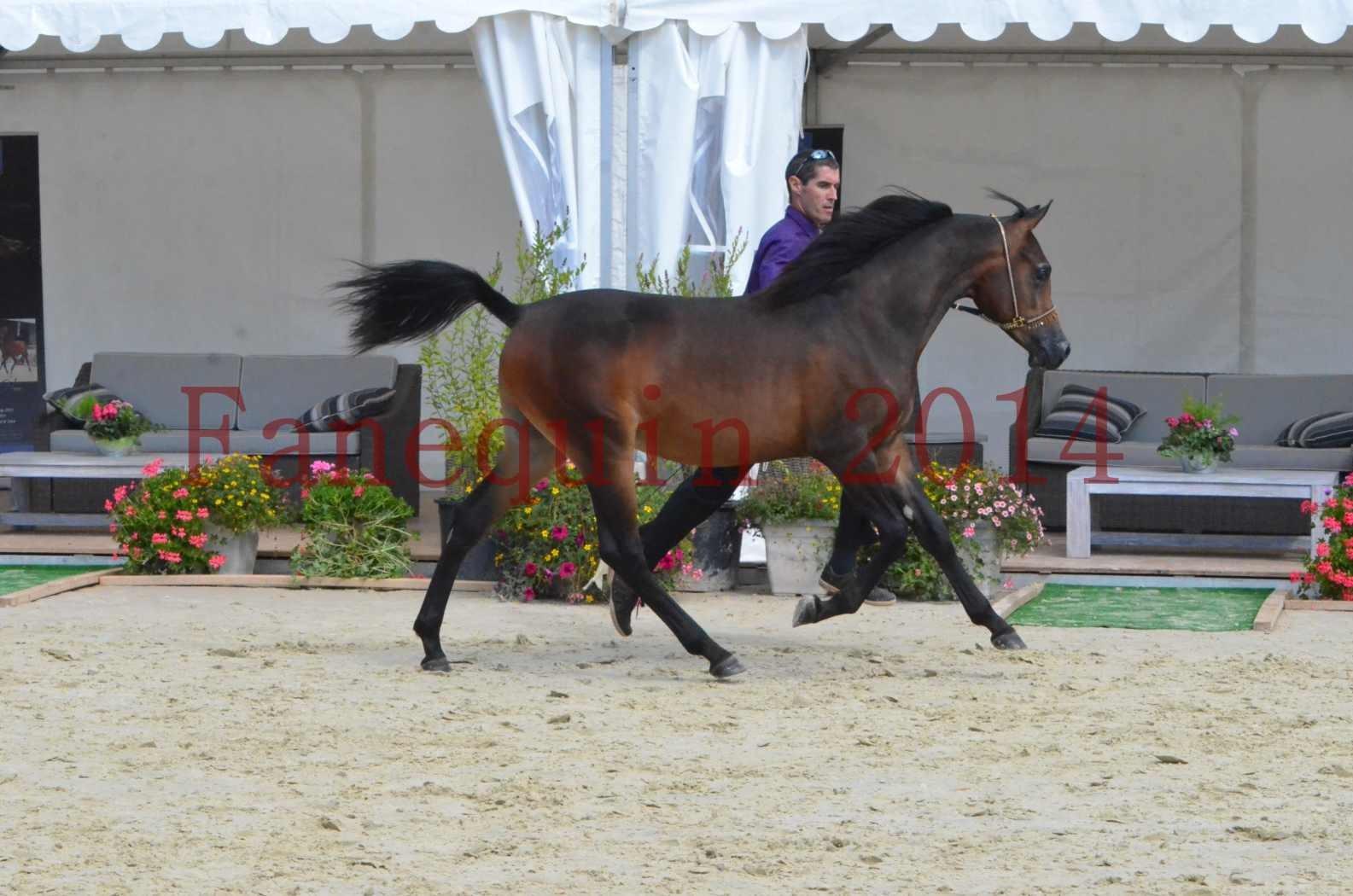 Championnat de FRANCE 2014 - Amateurs - SH FARAJAA - 28