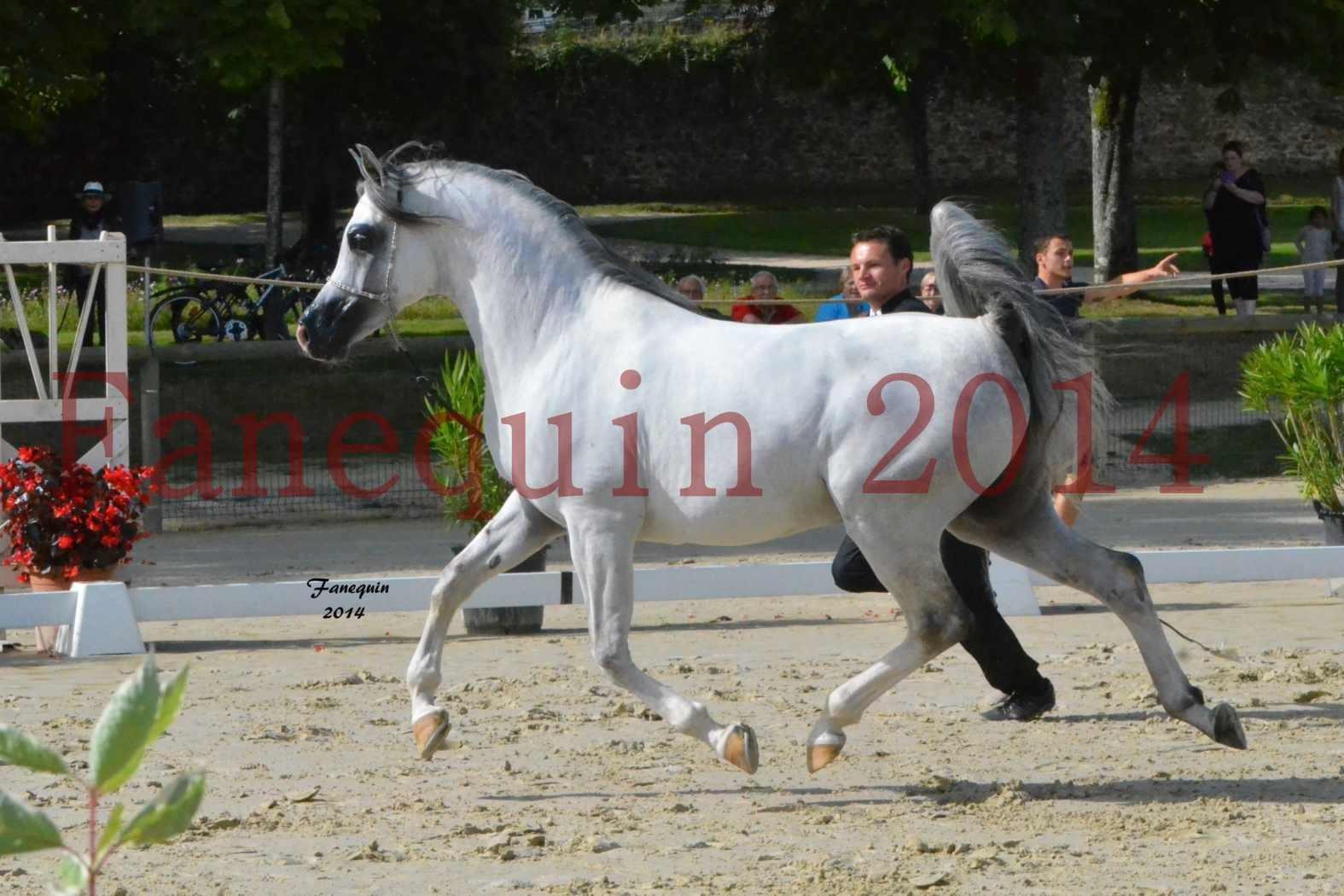 CHAMPIONNAT DE FRANCE  2014 A POMPADOUR - Notre Sélection - SHAOLIN DE NEDJAIA - 06