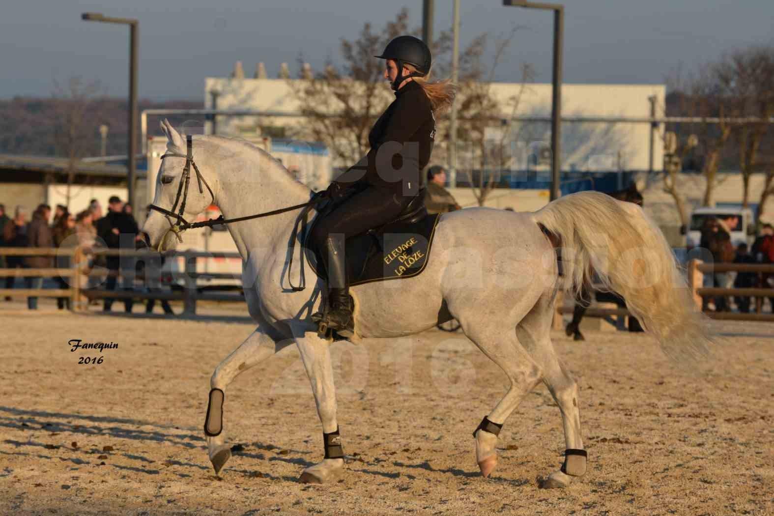 Cheval Passion 2016 - Présentation extérieure de chevaux Arabes montés - 18