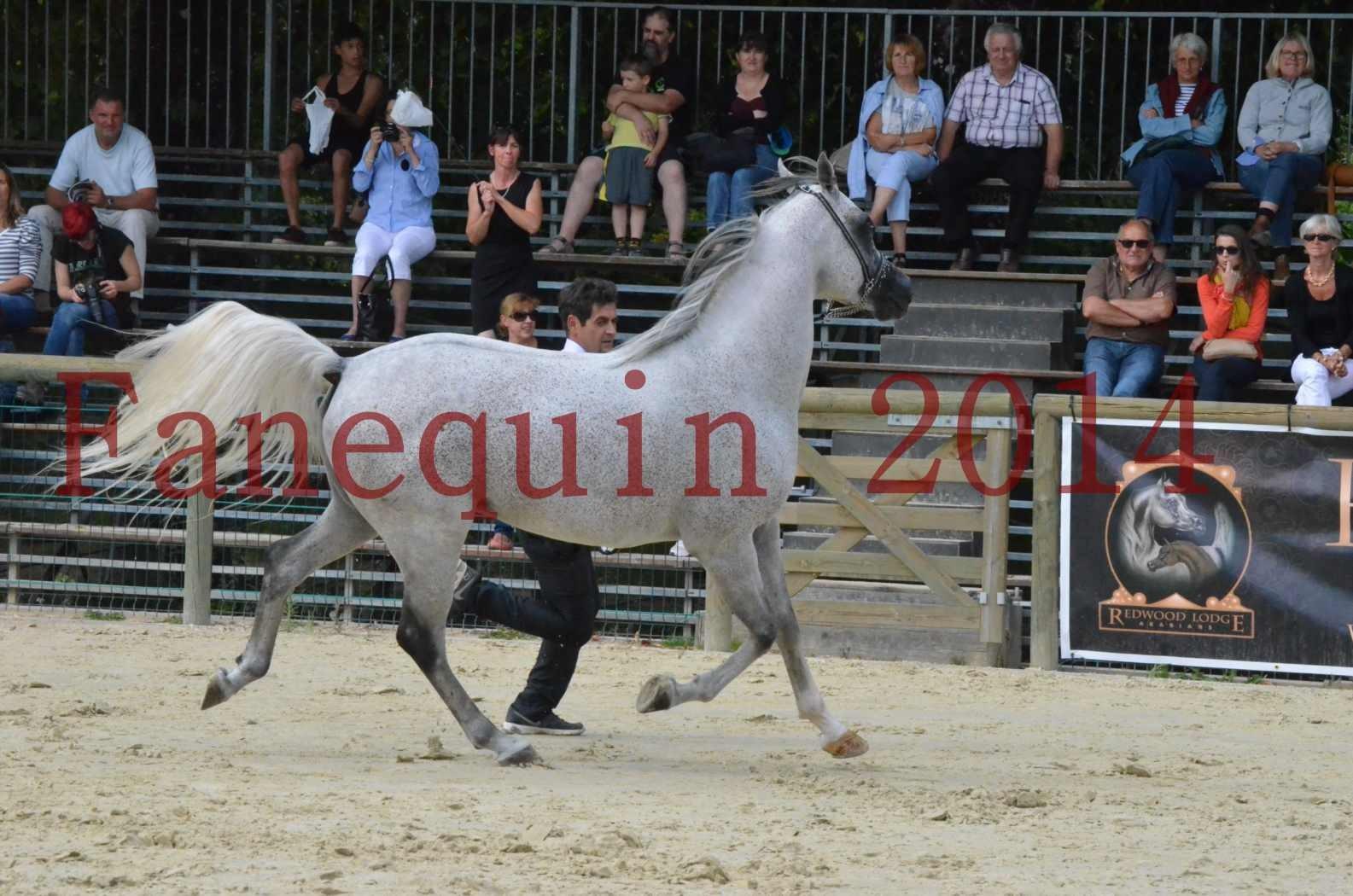 CHAMPIONNAT DE FRANCE  2014 A POMPADOUR - Championnat - SHEYK DE GARGASSAN - 14