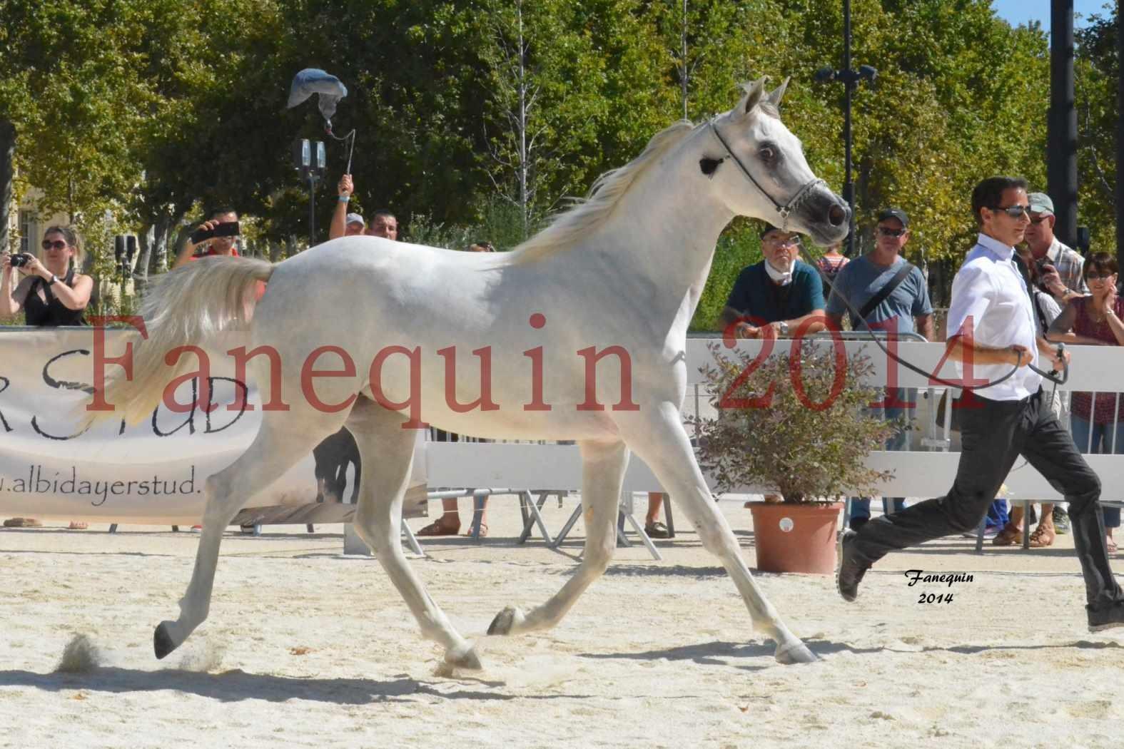 Concours National de Nîmes de chevaux ARABES 2014 - ENVY ETERNITY - 14