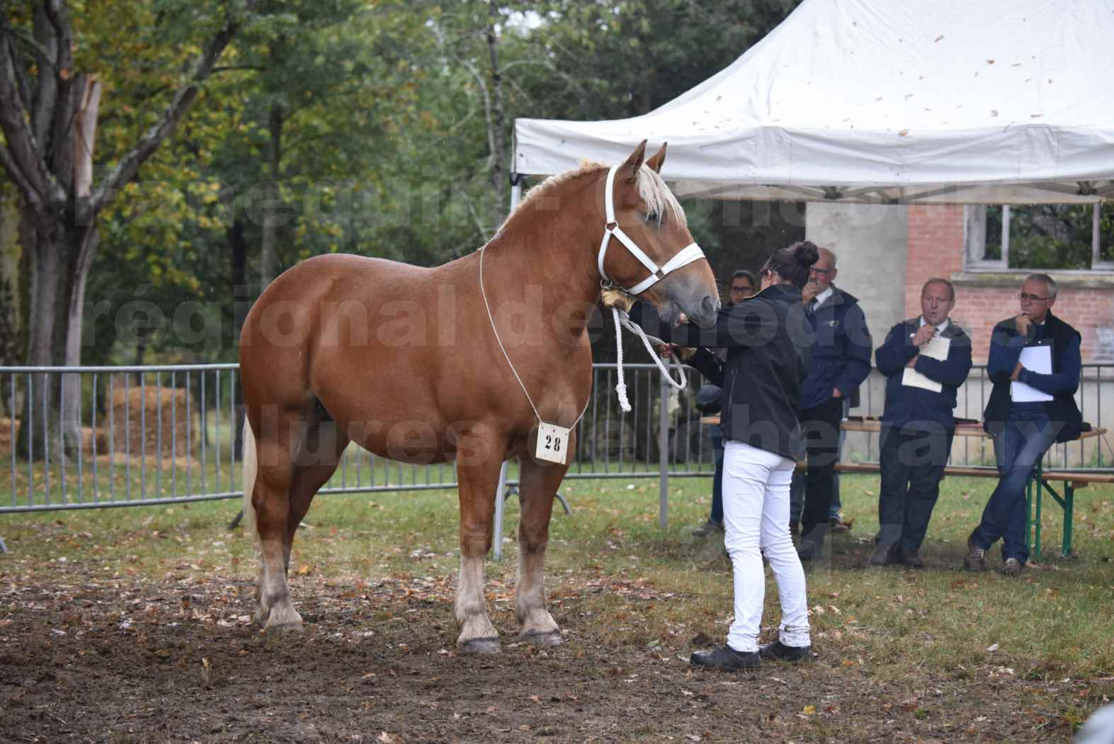 Concours Régional de chevaux de traits en 2017 - Trait COMTOIS - ETOILE 90 - 46