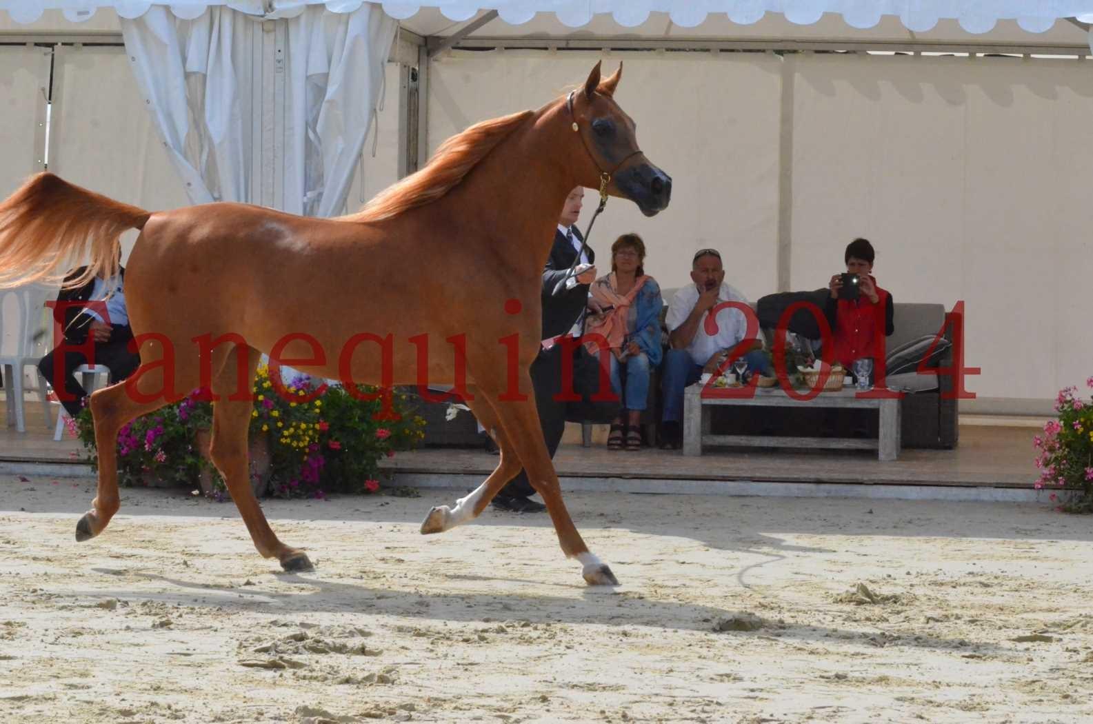 CHAMPIONNAT DE FRANCE 2014 A POMPADOUR - Sélection - LUTFINAH JA - 22