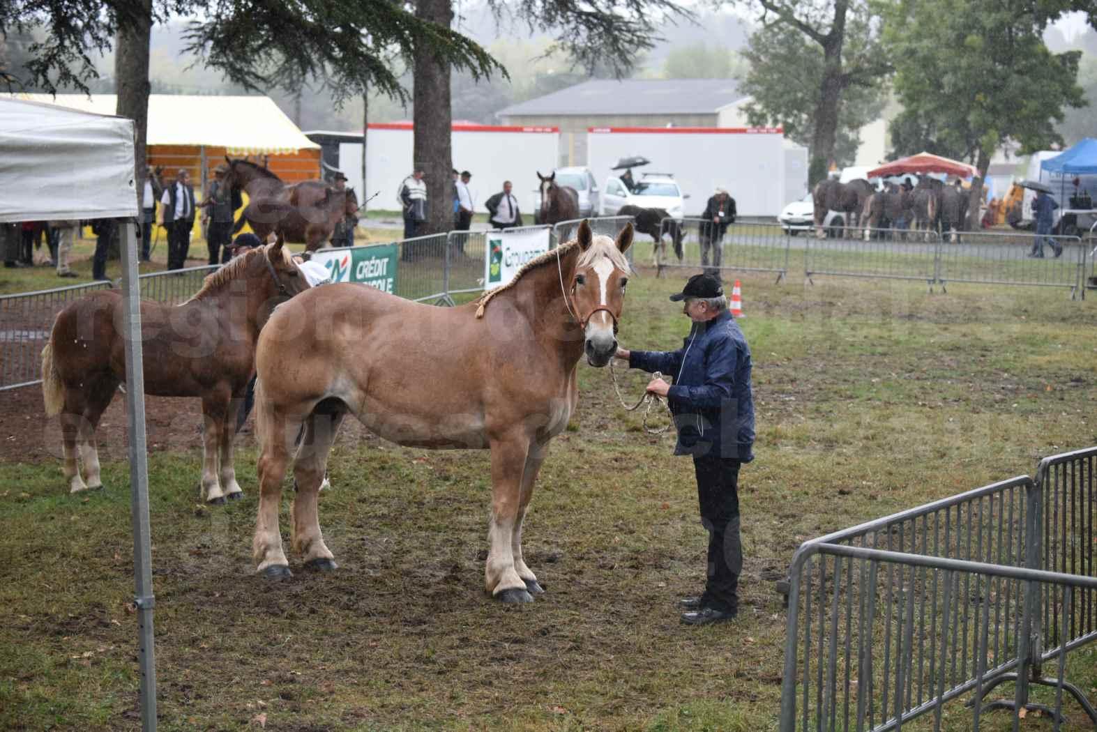Concours Régional de chevaux de traits en 2017 - Trait BRETON - Jument suitée - OREE DES AMOUROUX - 18