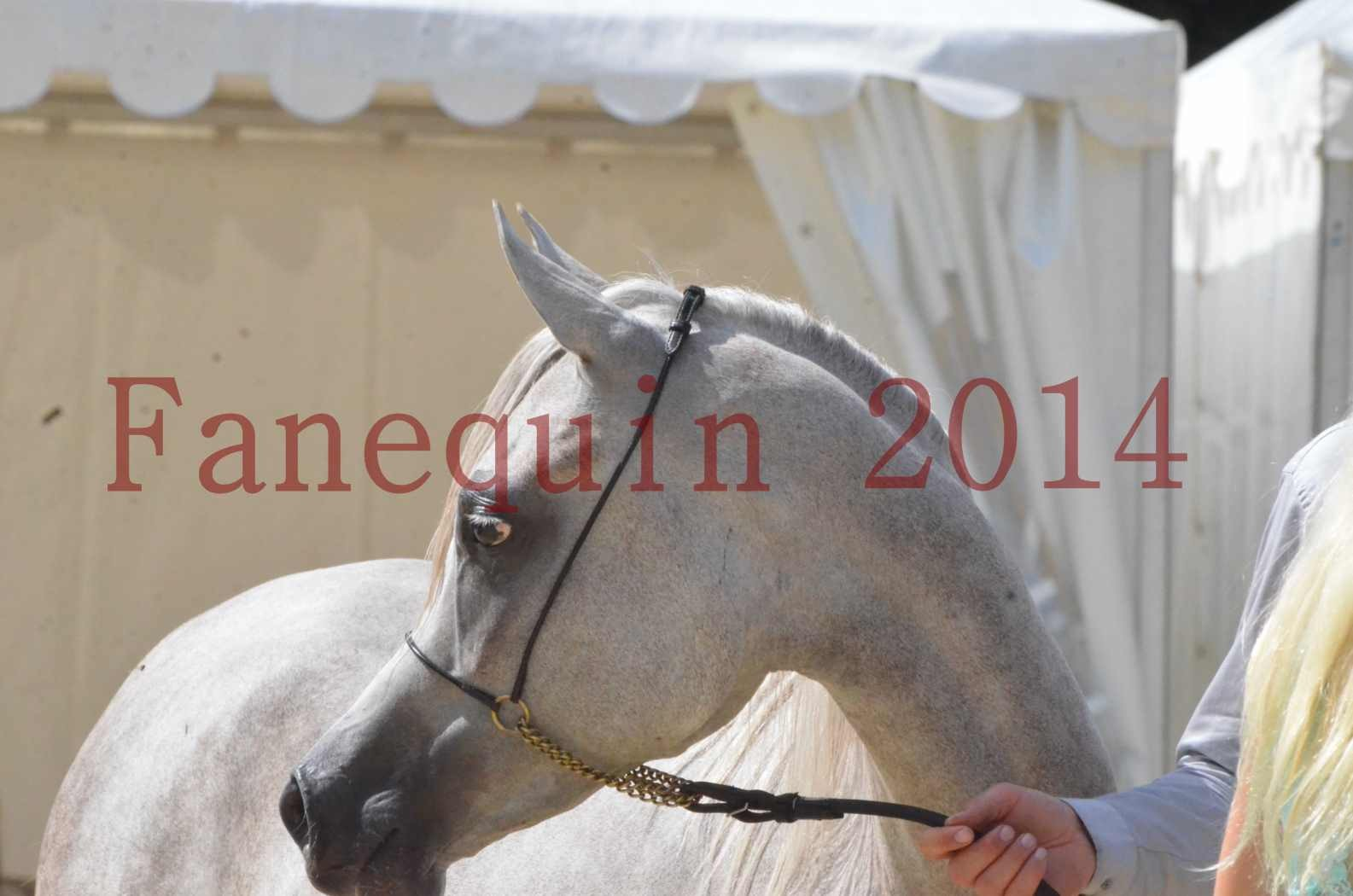 Championnat de FRANCE 2014 - Amateurs - VOLODIA DE LAFON - 094