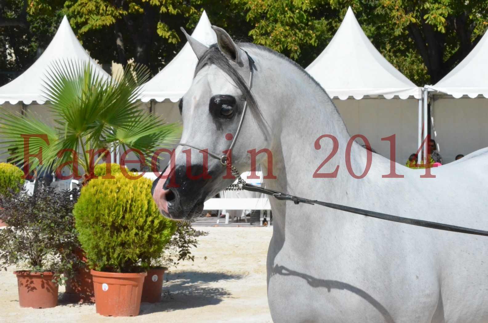 Concours National de Nîmes de chevaux ARABES 2014 - Sélection - SHAOLIN DE NEDJAIA - 16