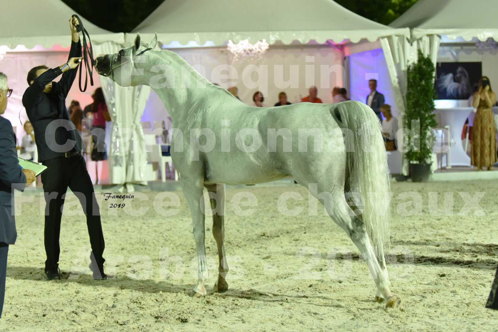 Championnat de France des chevaux Arabes en 2019 à VICHY - SHAMS EL ASHIRAF - 6