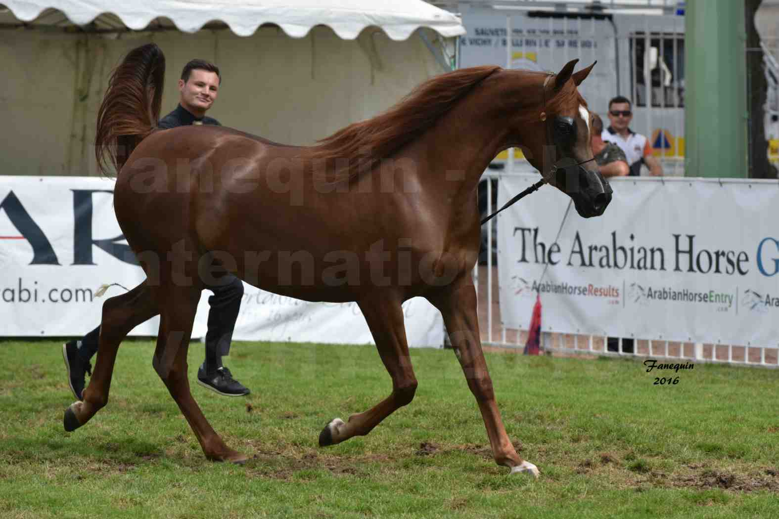 International Arabian Horse Show B de VICHY 2016 - PEARL DE DJOON - Notre Sélection - 24