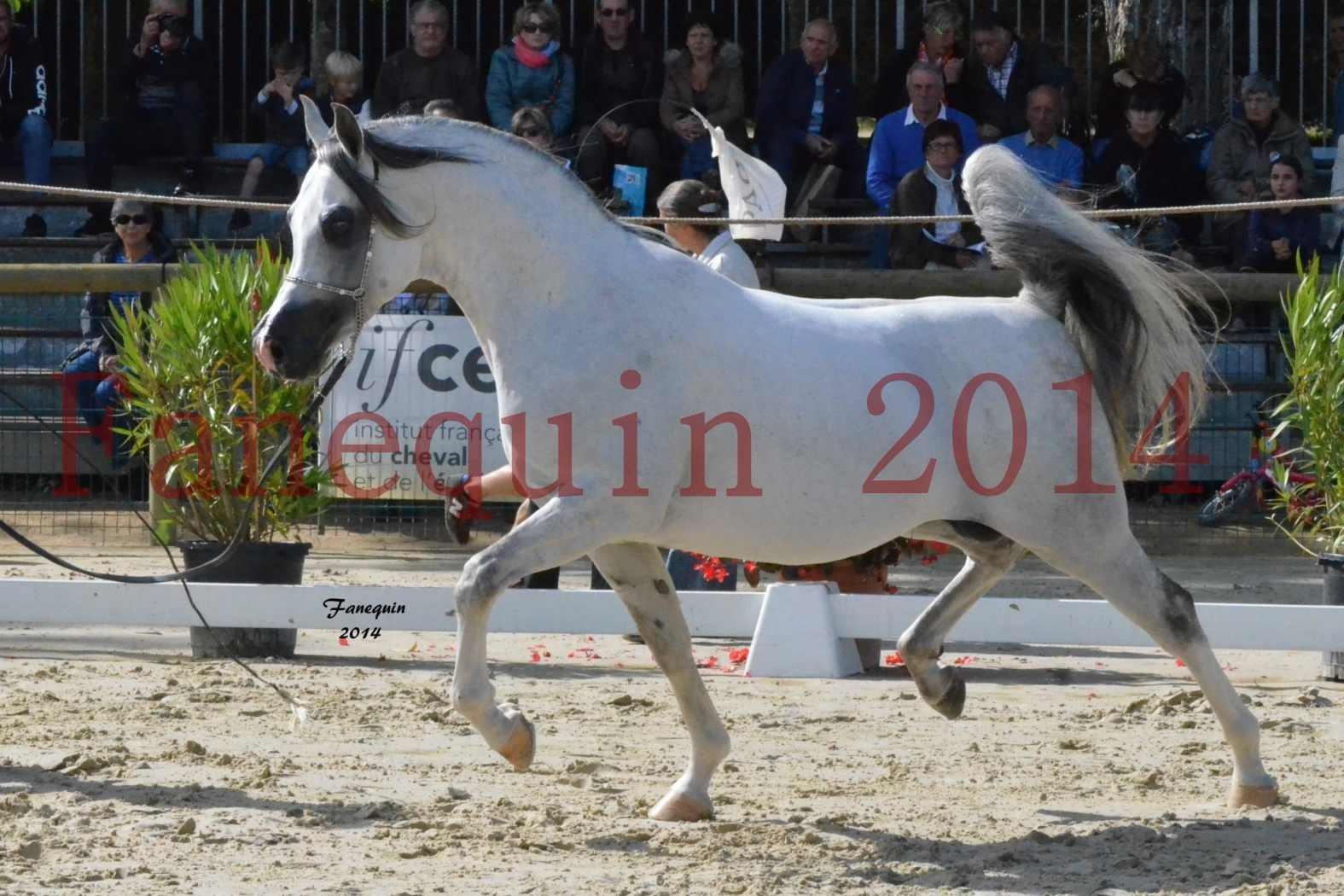 CHAMPIONNAT DE FRANCE  2014 A POMPADOUR - Notre Sélection - SHAOLIN DE NEDJAIA - 12