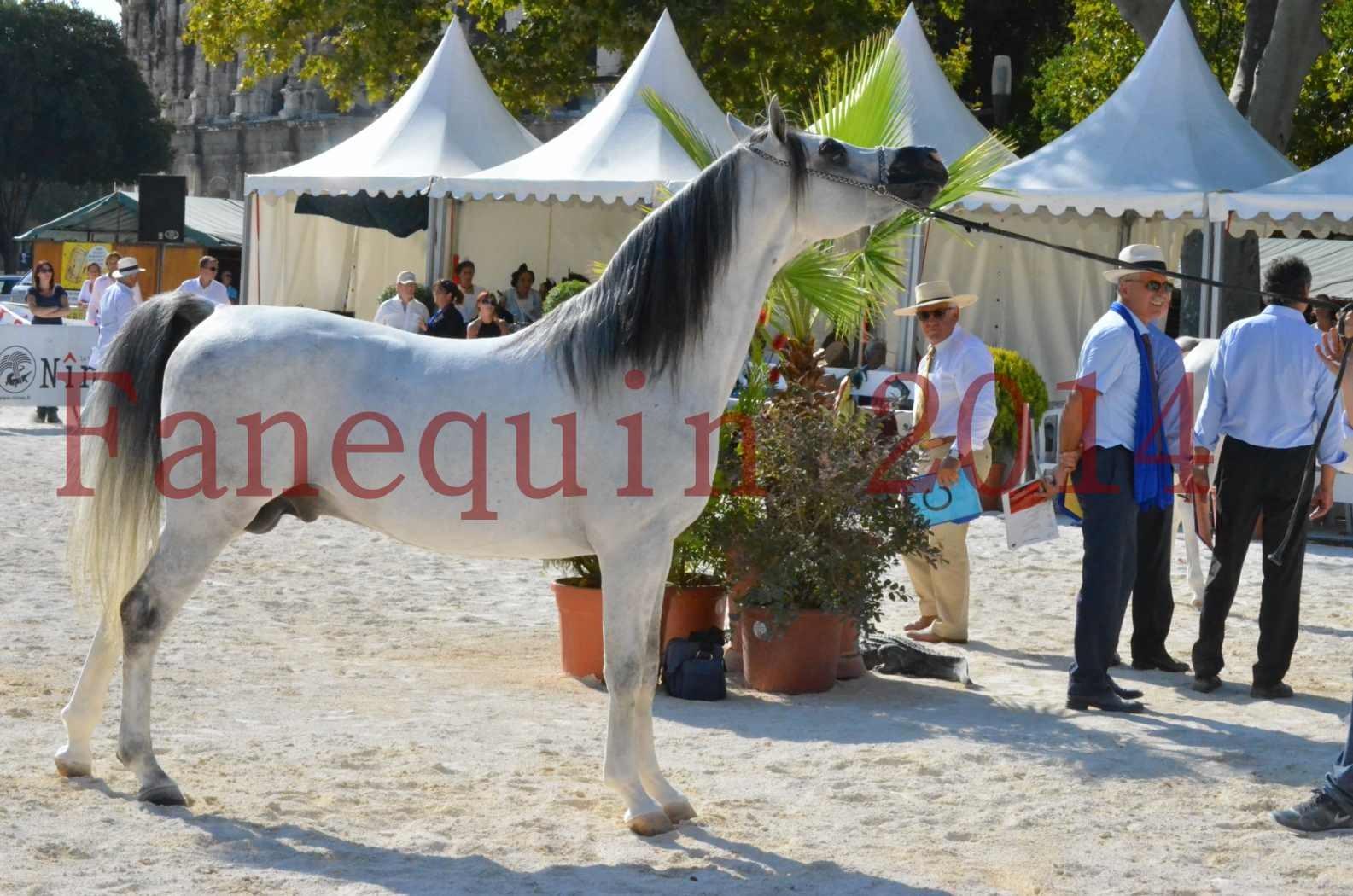 Concours National de Nîmes de chevaux ARABES 2014 - Championnat - SHAOLIN DE NEDJAIA - 40