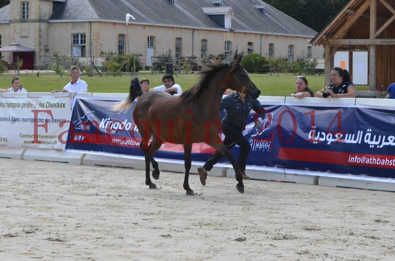 Championnat de FRANCE 2014 - Amateurs - KAL'ELLE D'ELHORIA - 03