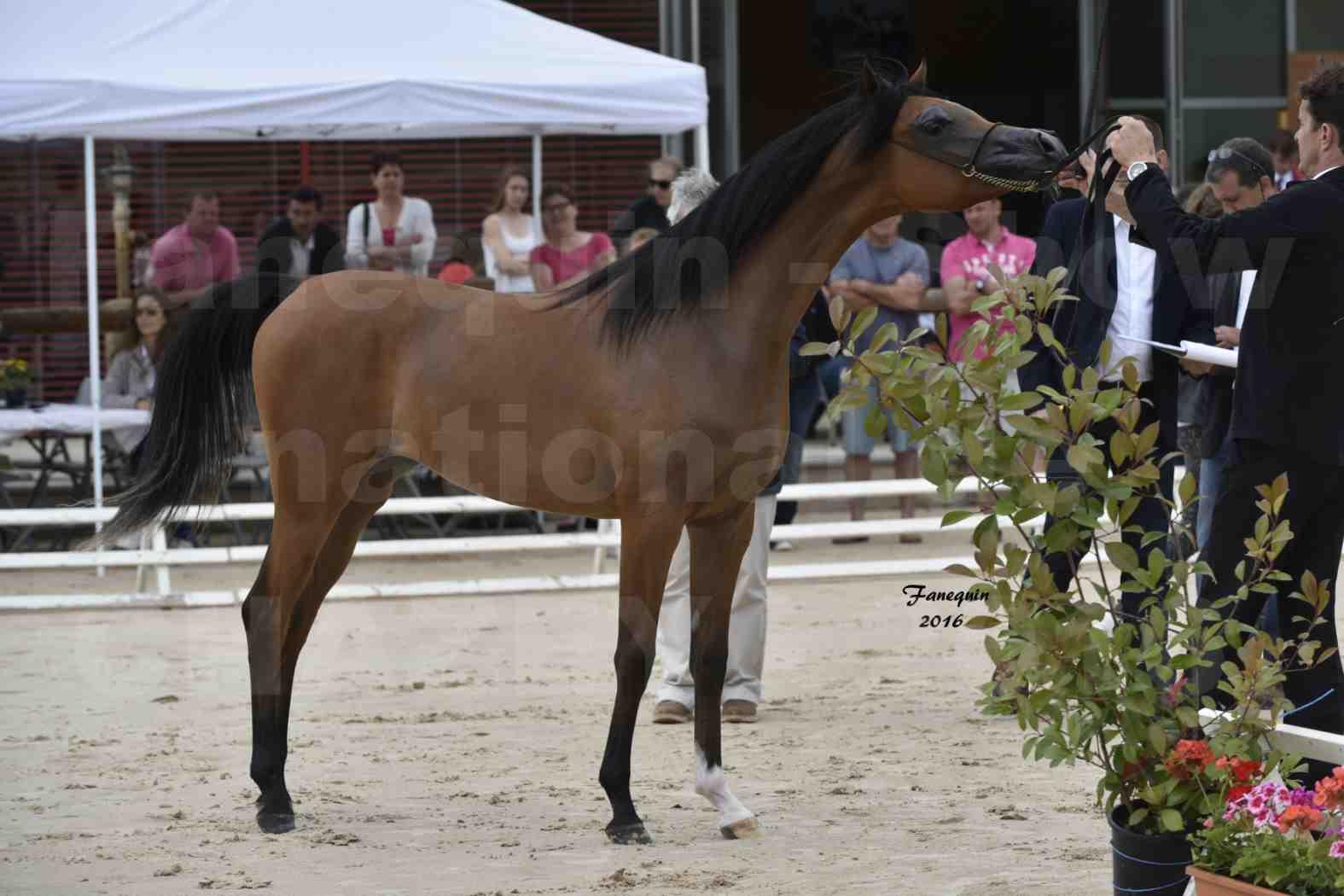 Show national de chevaux arabes de CHAZEY sur AIN - JAMEELAH AL ADEYAT - 3