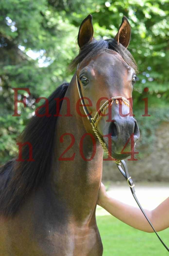 Championnat de FRANCE 2014 - Amateurs - SH FARAJAA - 100